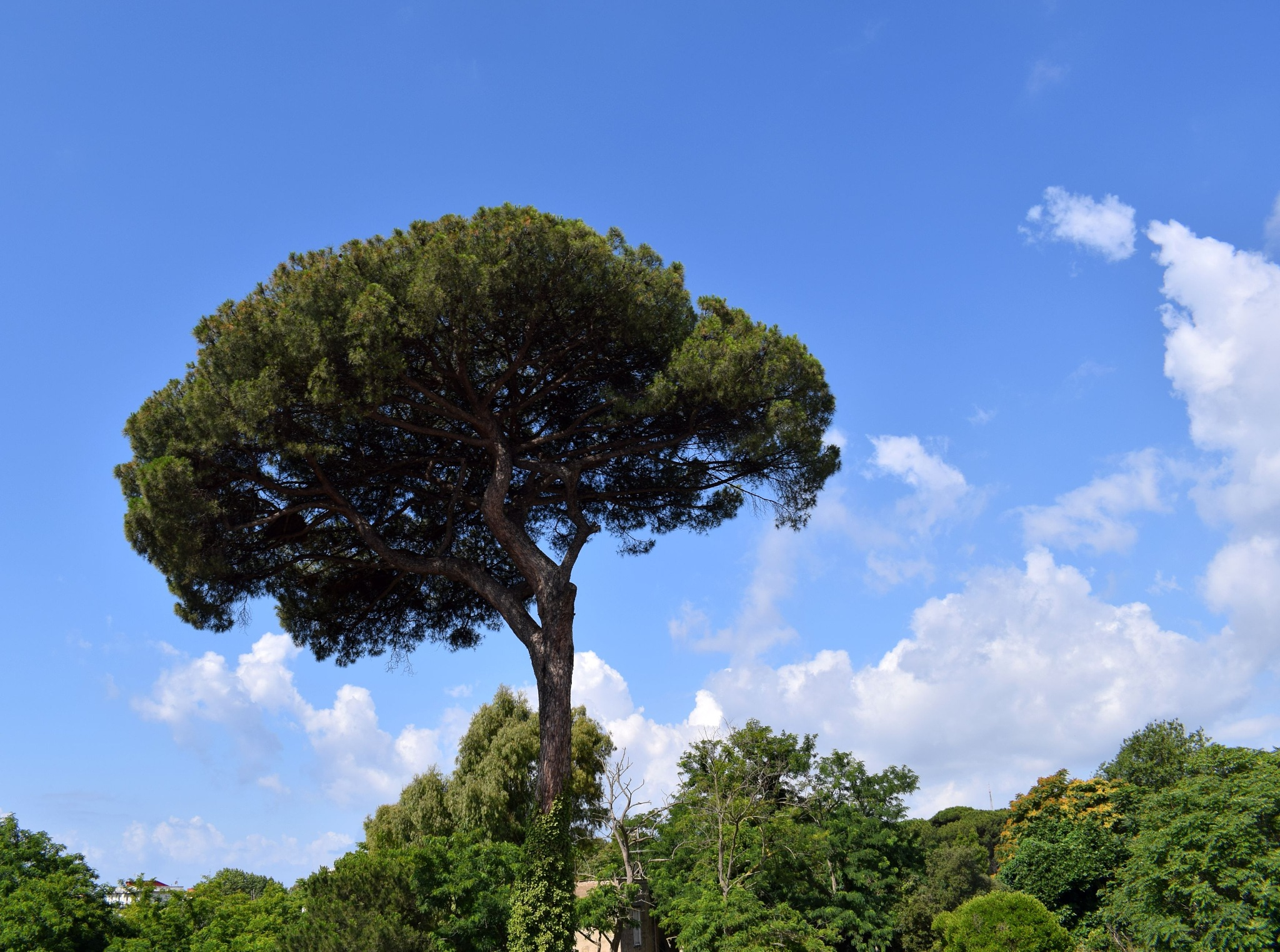 Naples - The Neapolitan Tree and... the Little Houses by Mister Arnauna & Gatto Giuggiolone