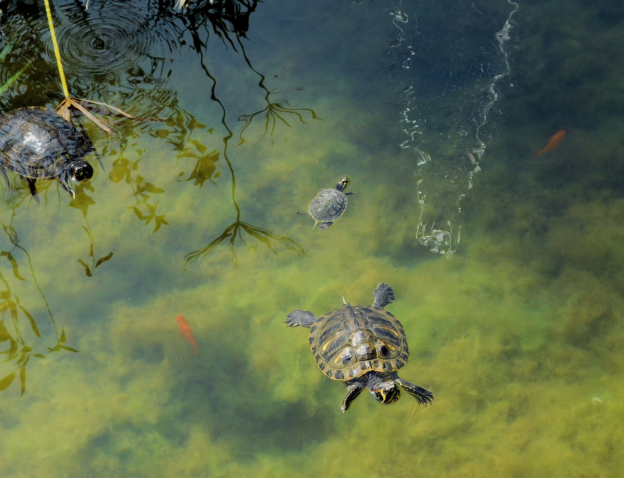 La Familia Tortuga i els Peixets - The Turtle Family and the Little Fishes by Mister Arnauna & Gatto Giuggiolone