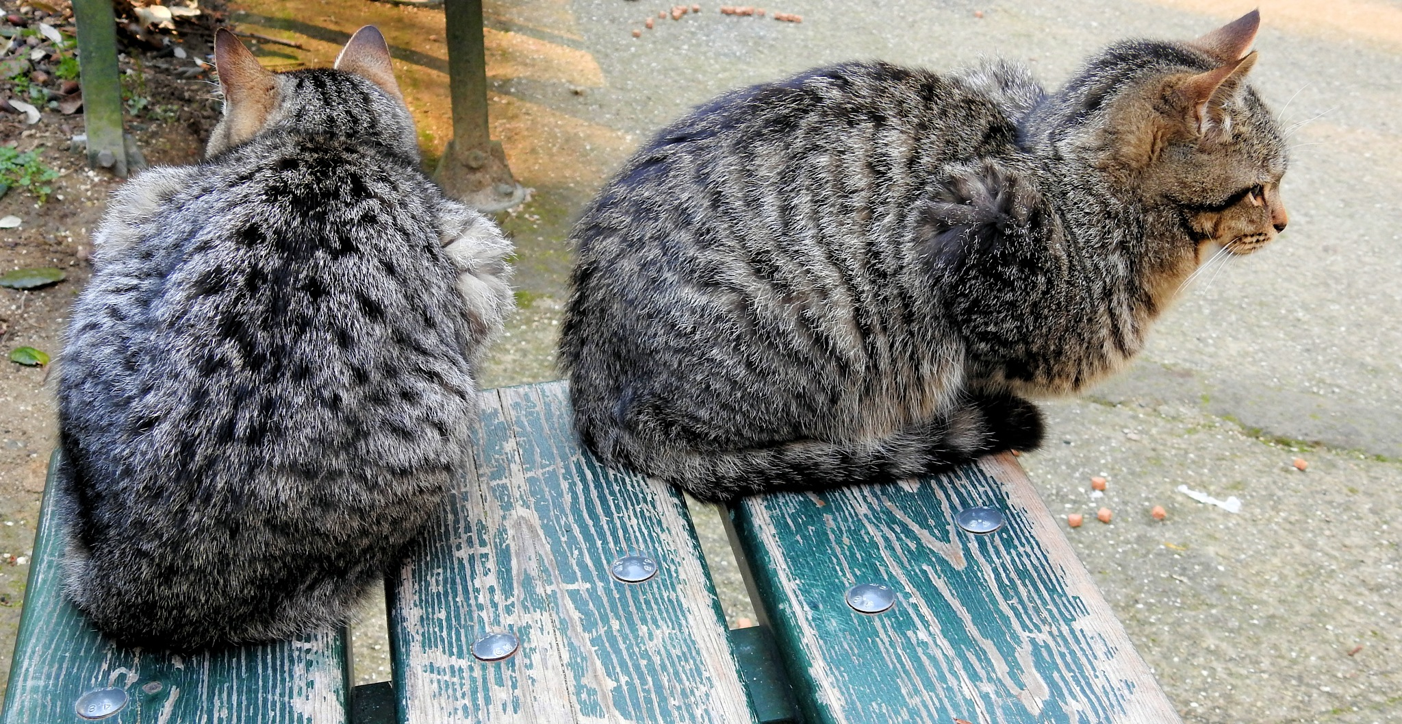 Naples - Villa Floridiana - The Grey Cats Brothers - 1 by Mister Arnauna & Gatto Giuggiolone