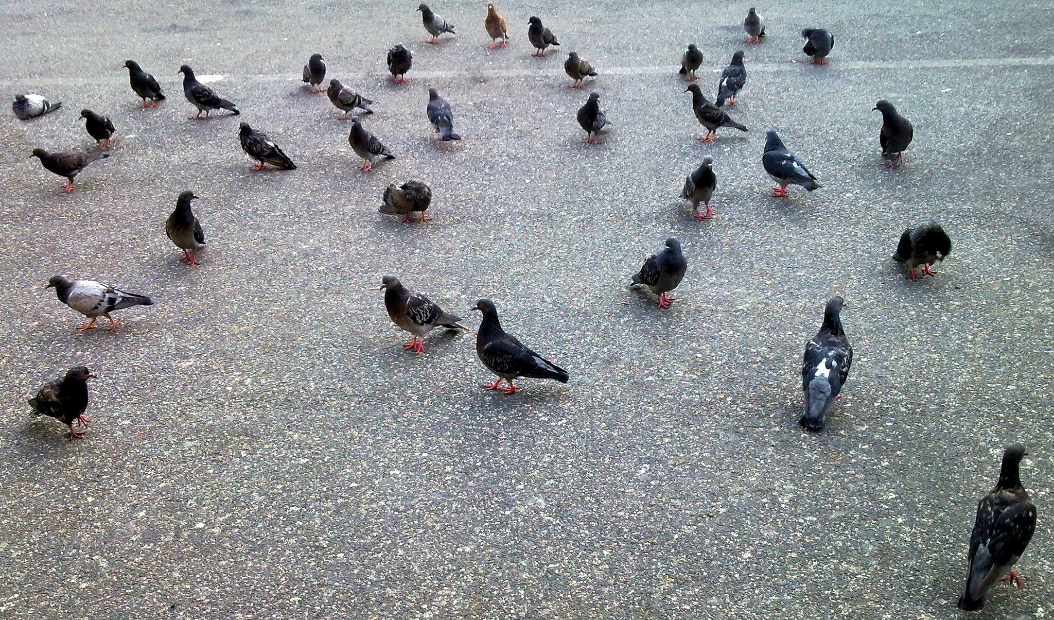 Nàpols - Naples - Un colom.. potser? -  A Pigeon... maybe? - 1 by Mister Arnauna & Gatto Giuggiolone