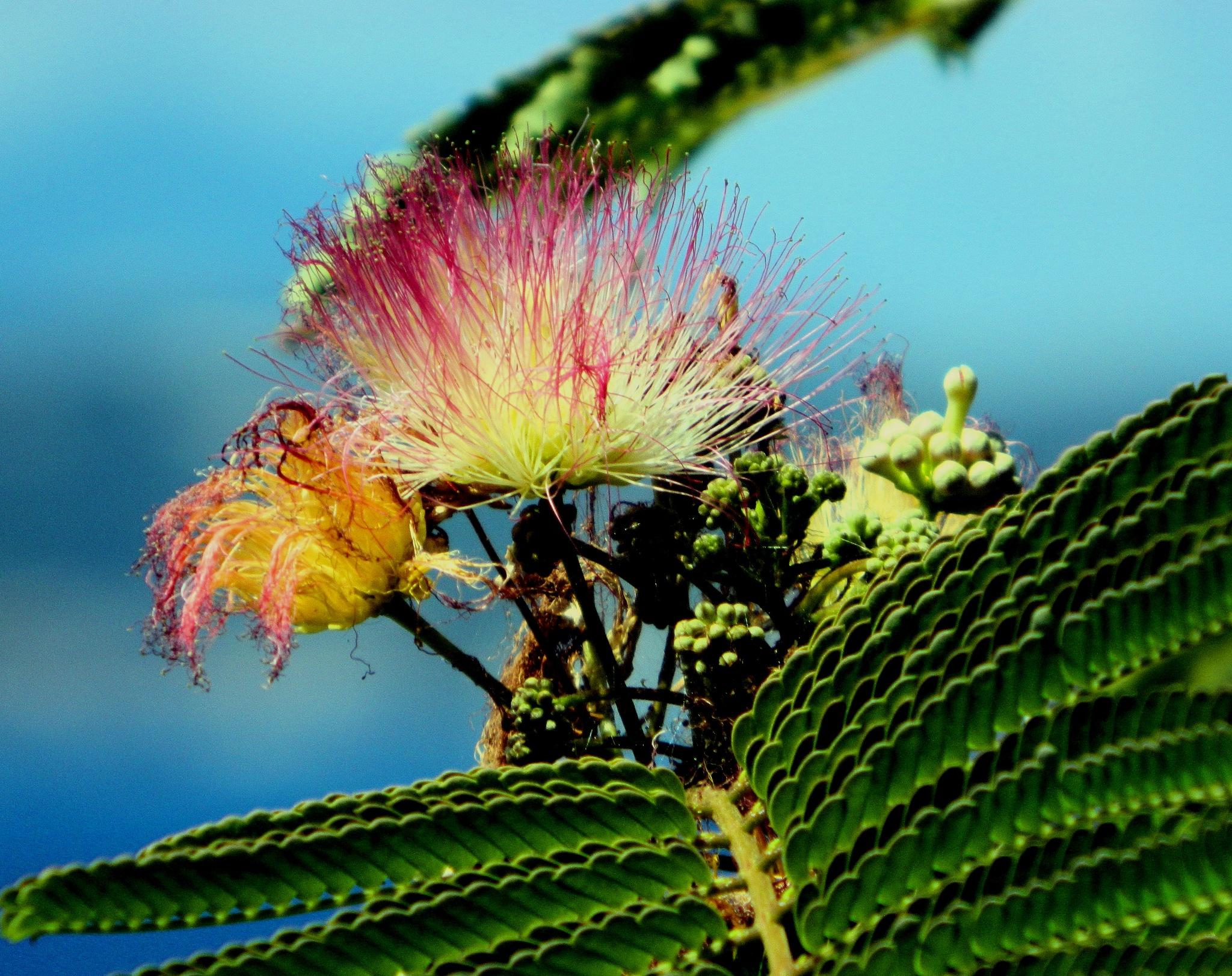 Photo in Random #flower #naples #pozzuoli #fiore #mister arnauna #napoli #nature #natura #pianta #plant #botany
