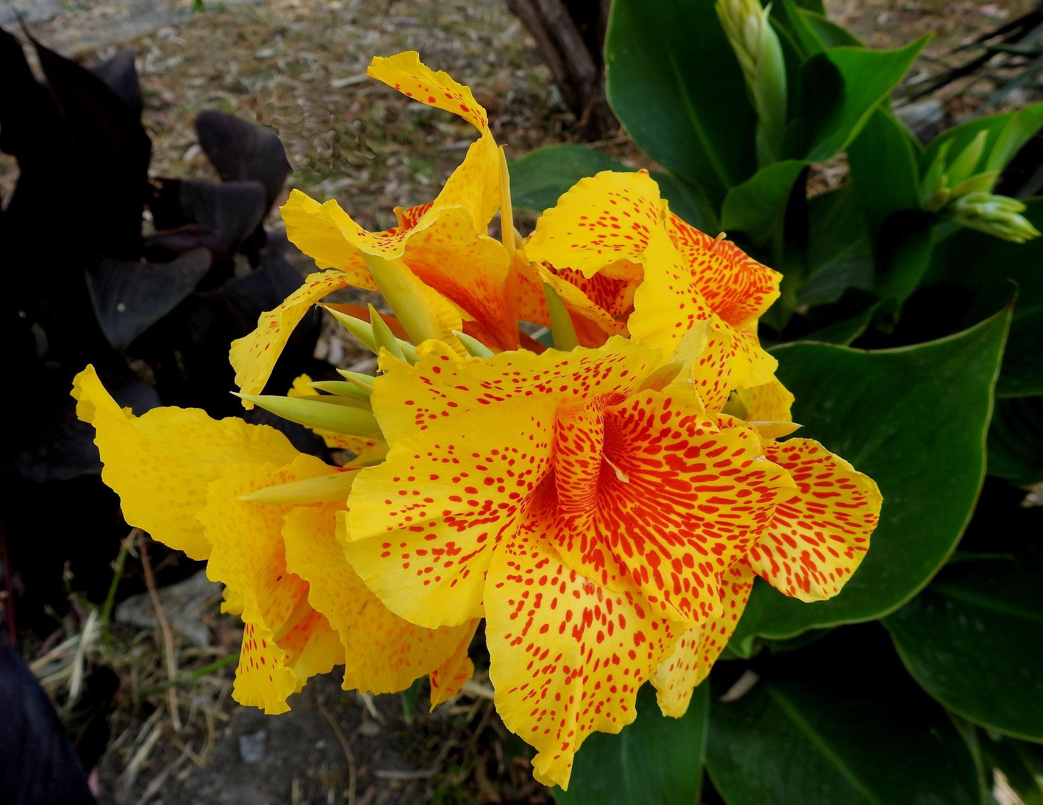 The Flower - La Flor - 5 by Mister Arnauna & Gatto Giuggiolone