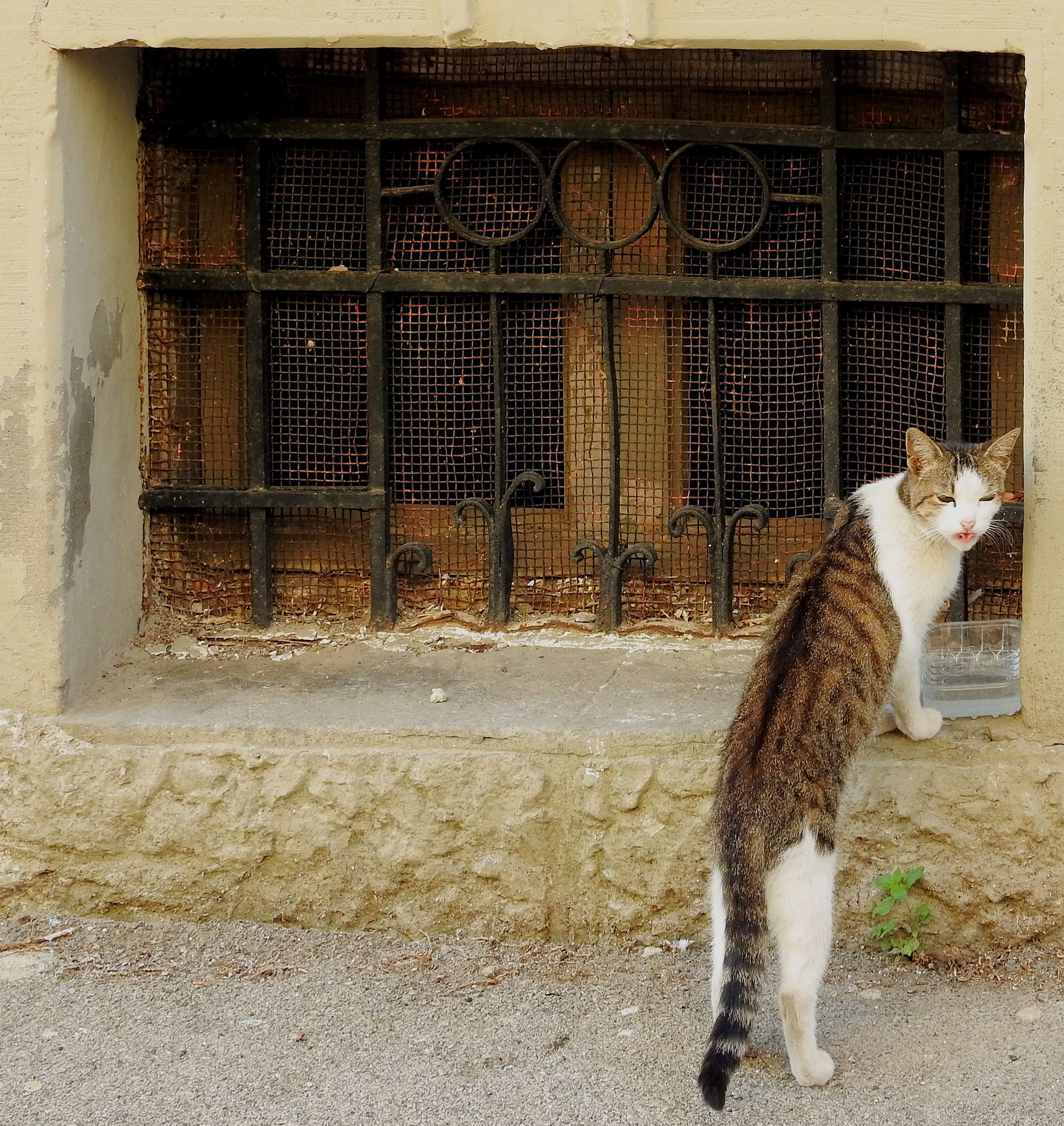 """Naples - Materdei - """"I hate... the Hot Water! Bleahhh!"""" - by Mister Arnauna & Gatto Giuggiolone"""