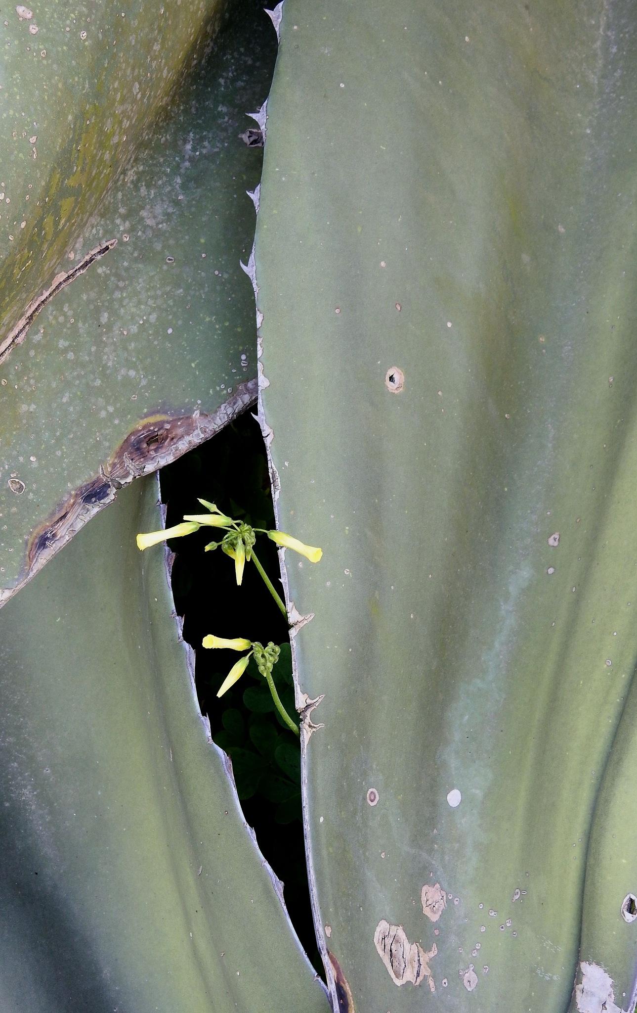 La Fulla és Vida - The Leaf Is Life!!! - 1 by Mister Arnauna & Gatto Giuggiolone