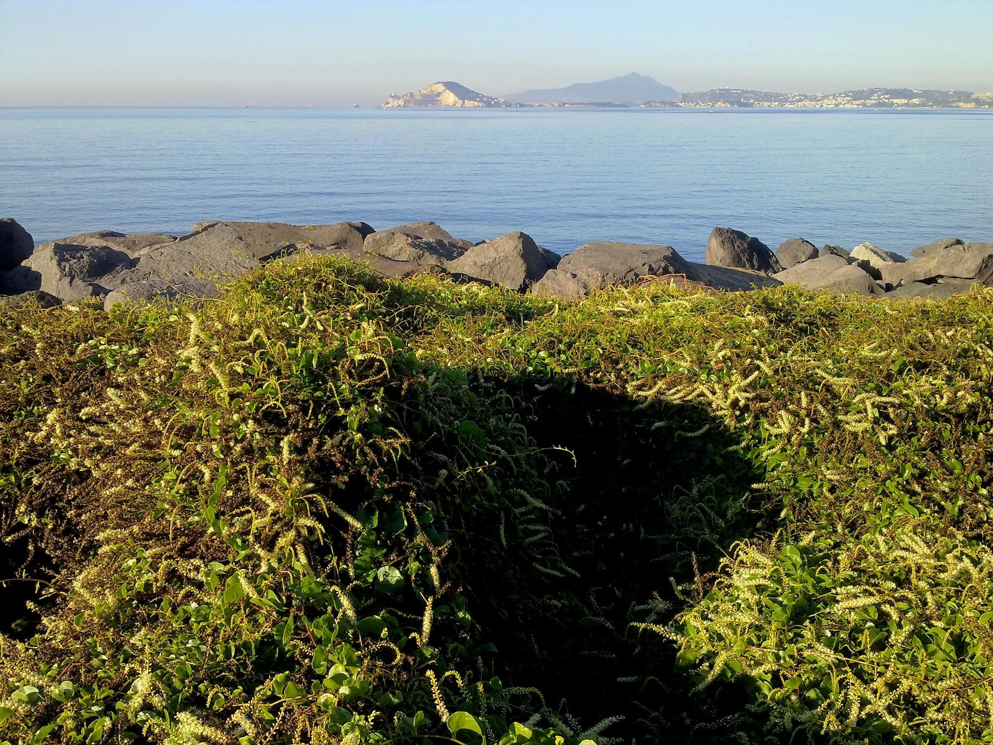 La Mar Verd - The Green Sea - 01 by Mister Arnauna & Gatto Giuggiolone