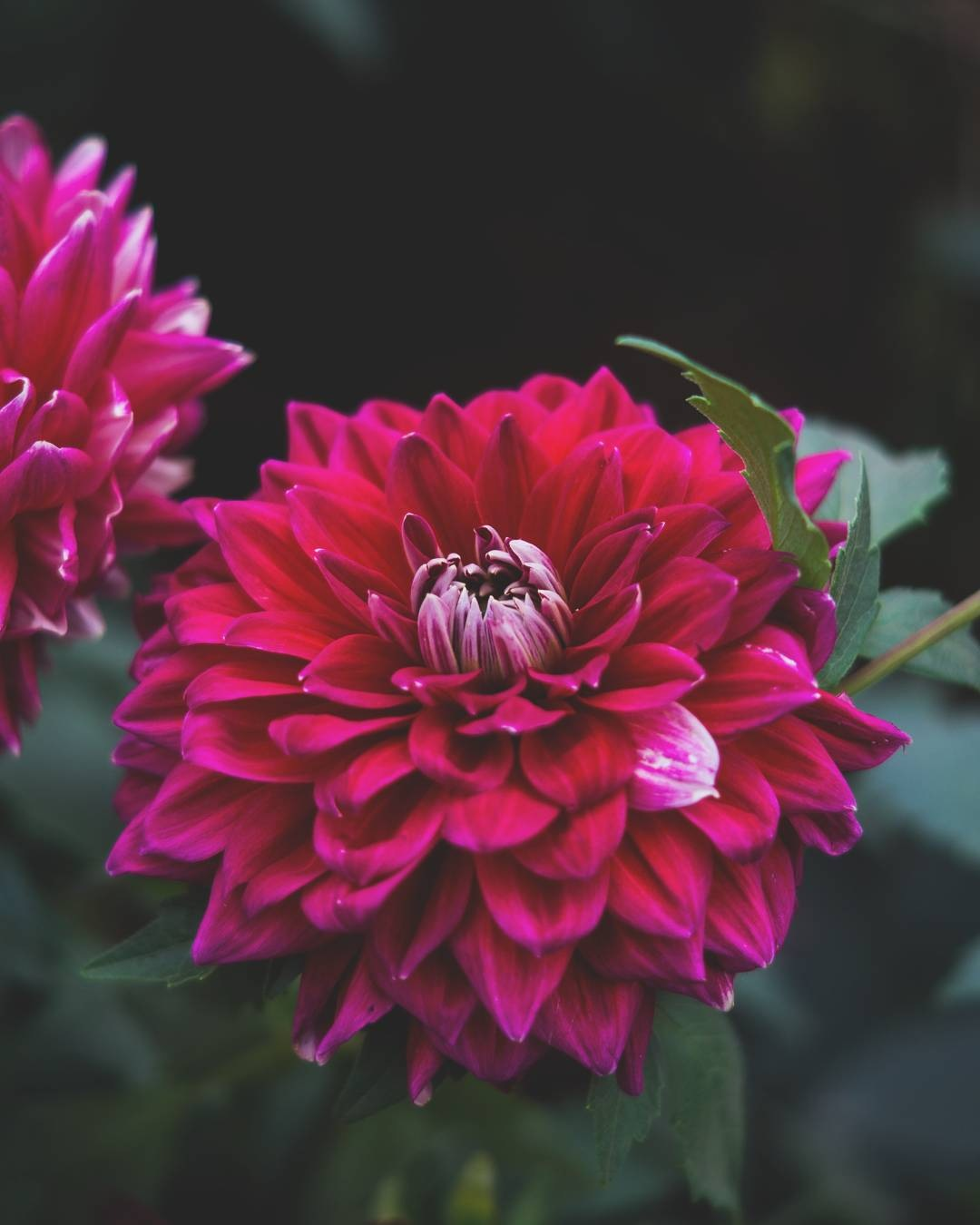 flowers by Nagarjun Mallesh