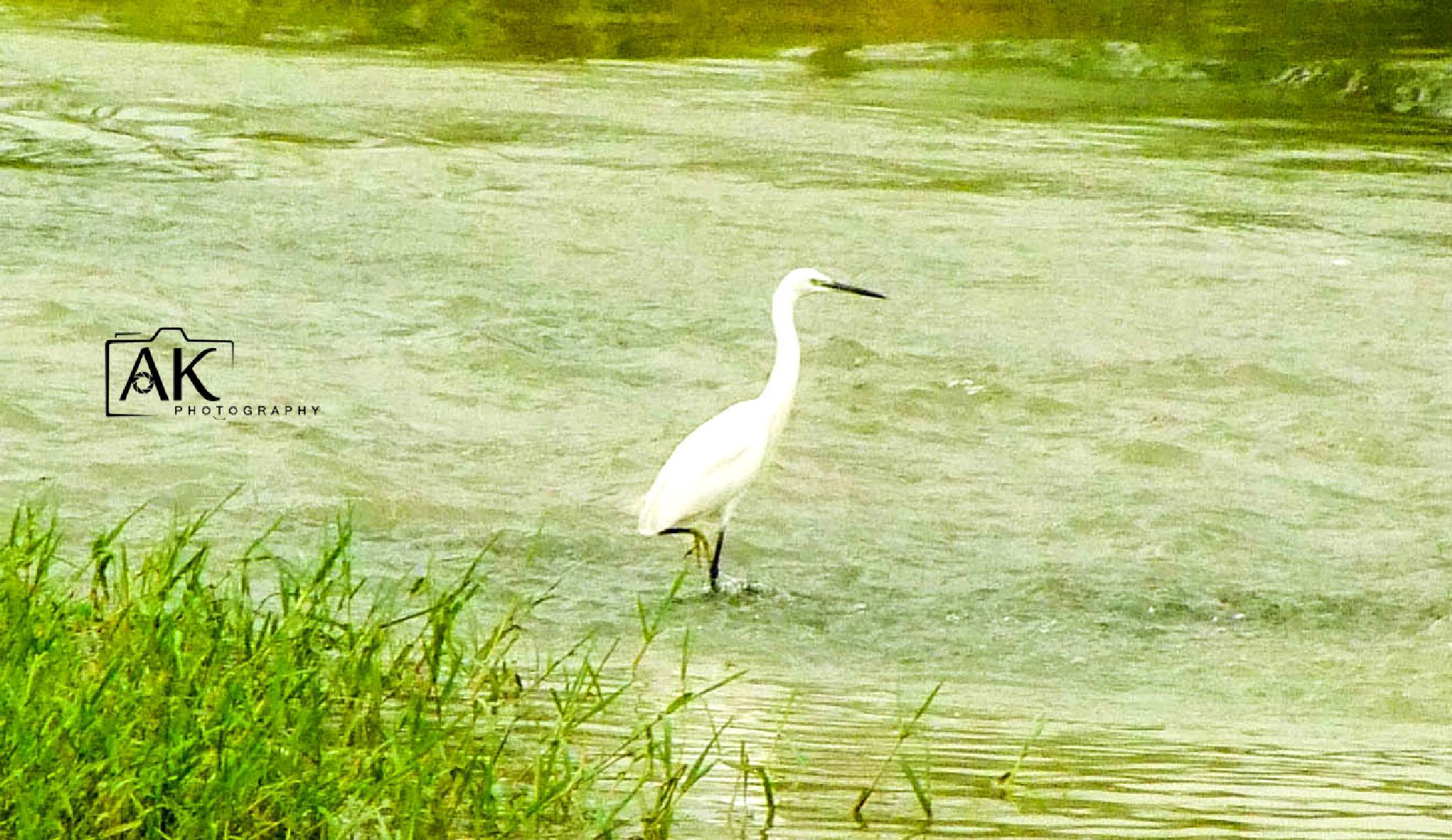 Photo in Animal #birds #animal #nature