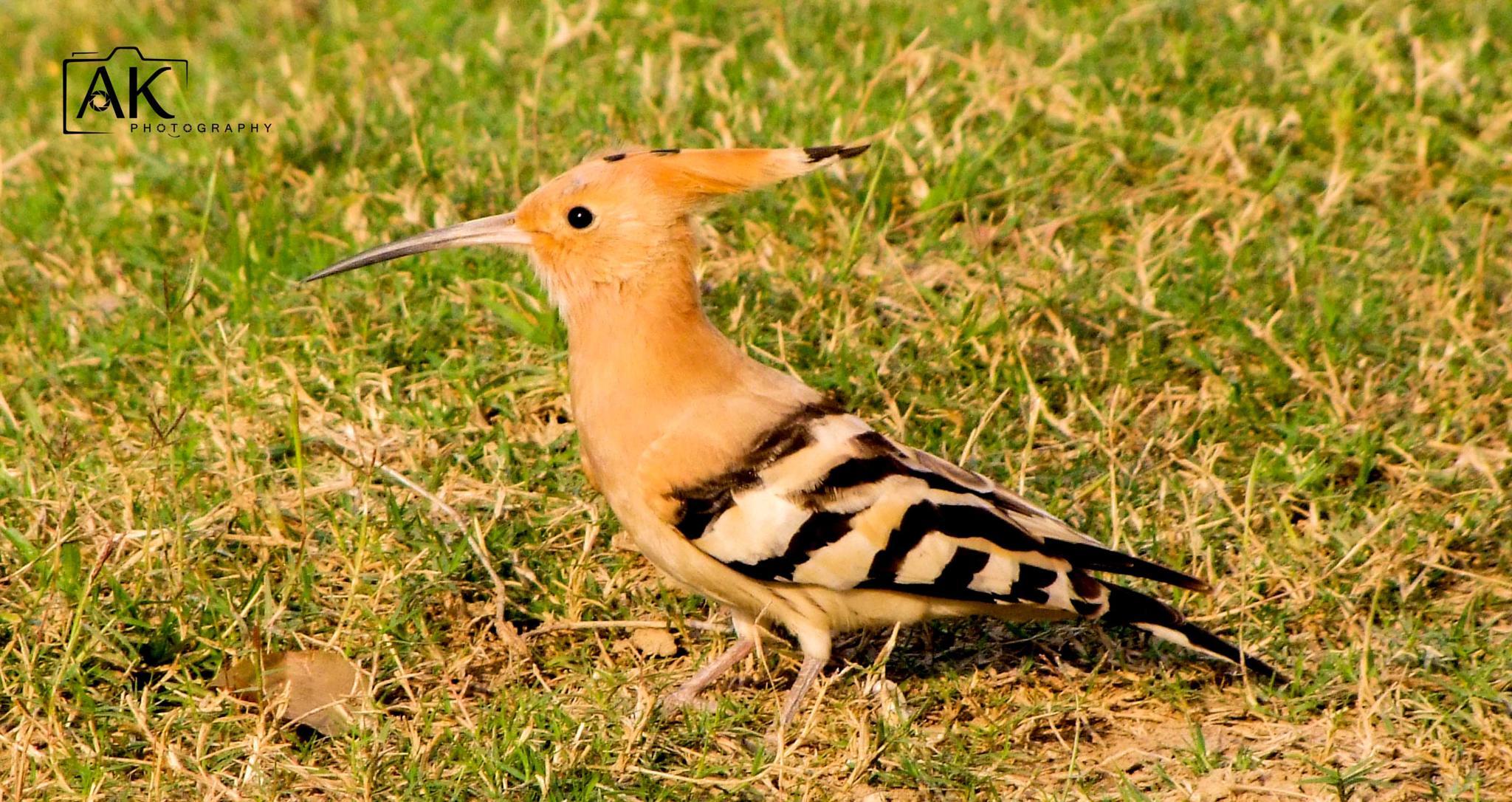 Photo in Animal #nature #birds #animal