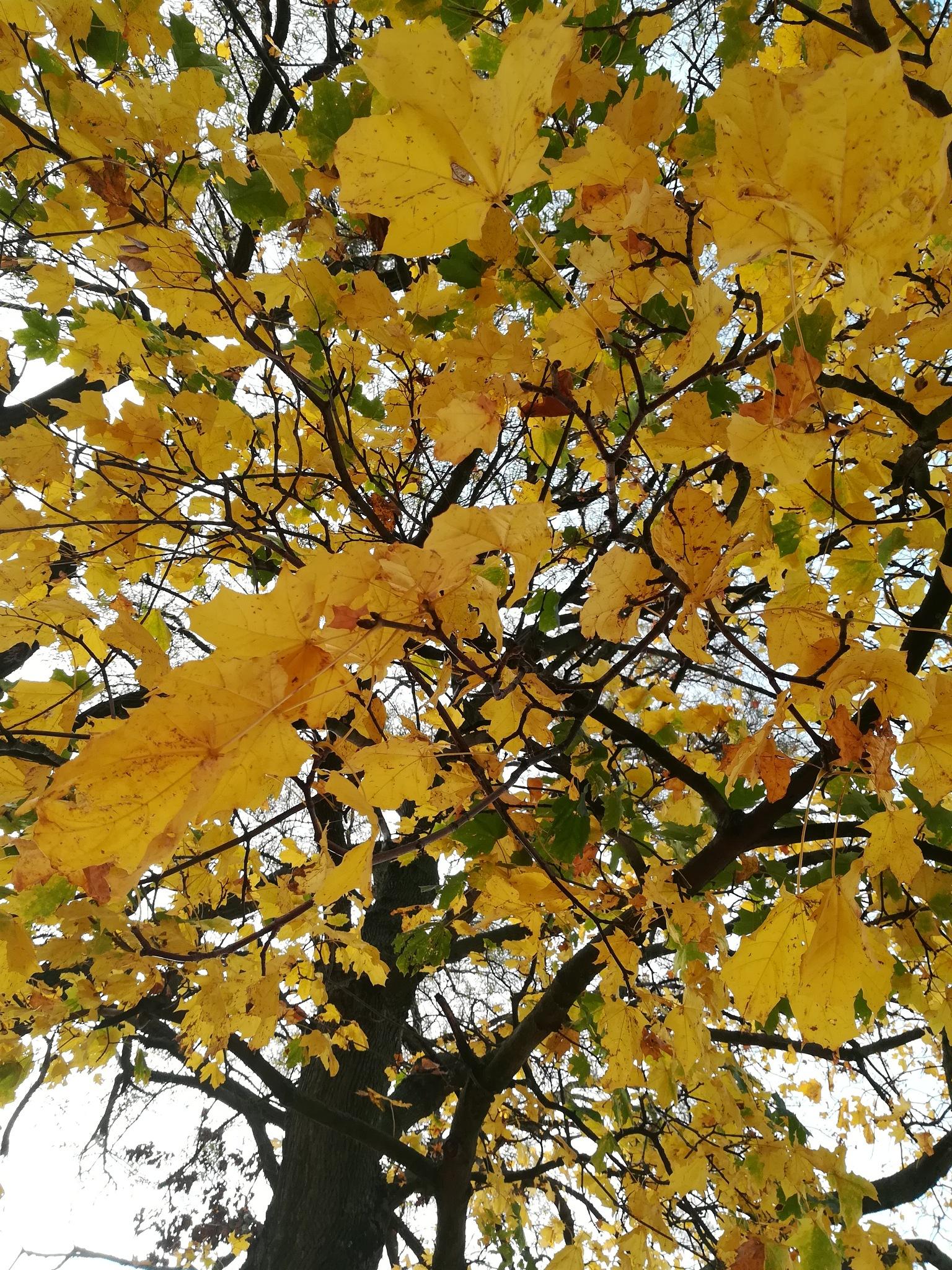 Polish gold autumn by Natalia Wolska