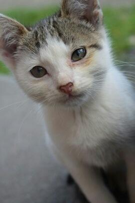 White cat by Natalia Wolska