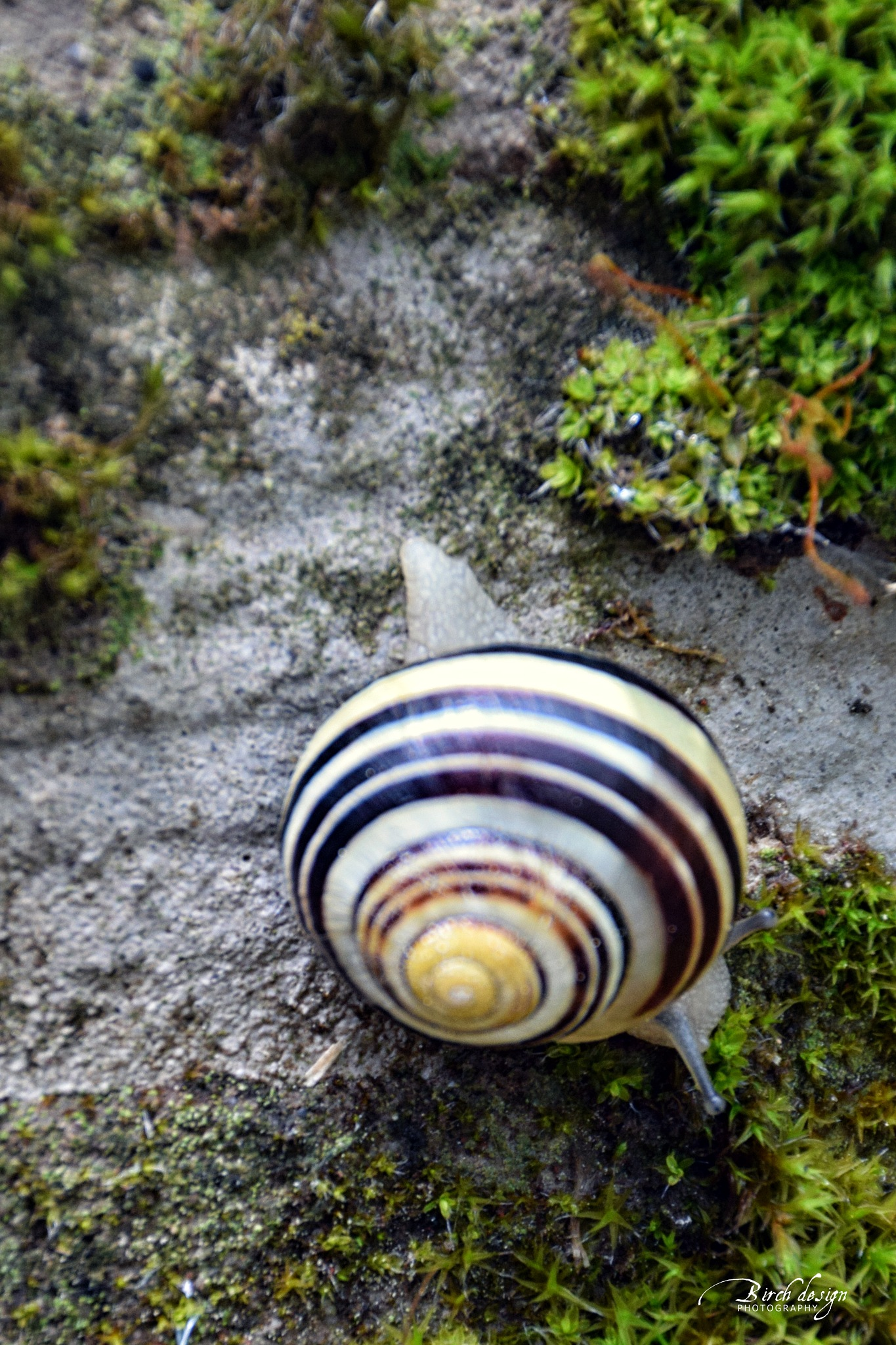 something striped by tomazek