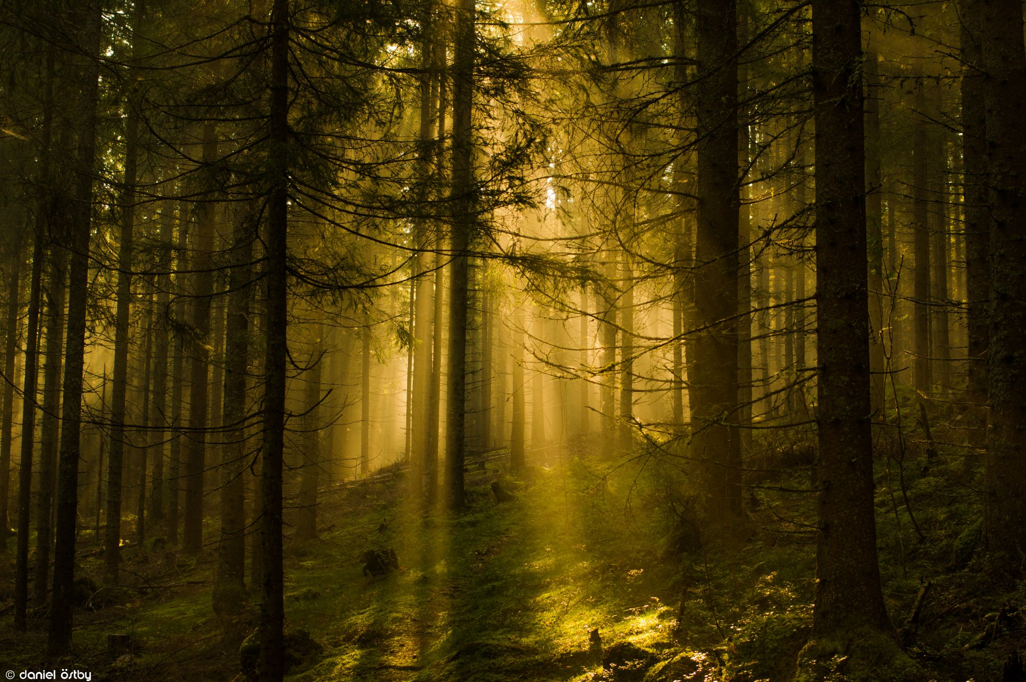 Let there be light by Daniel Östby