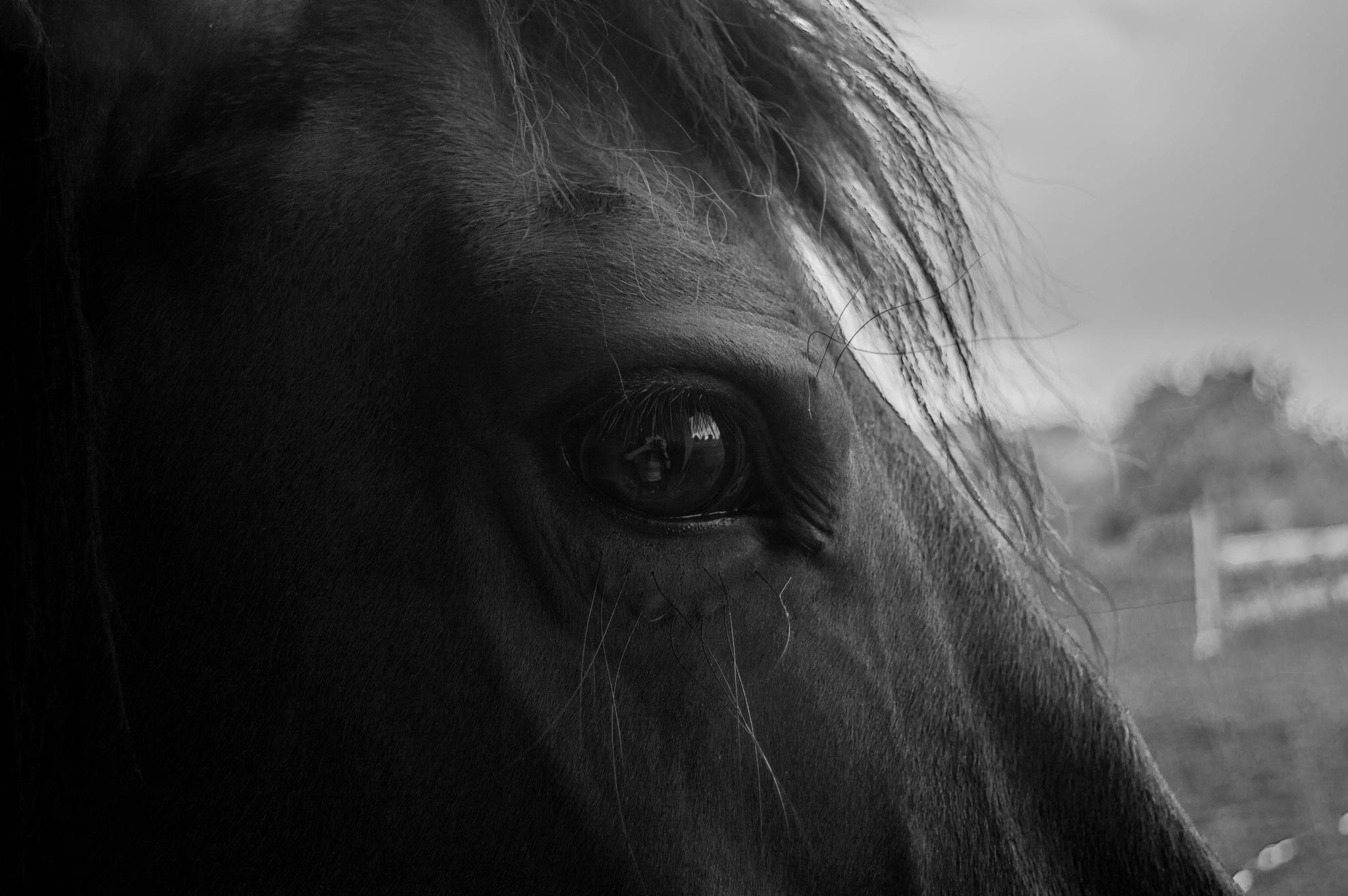 Reflection in the eye by Milenka Derumeaux