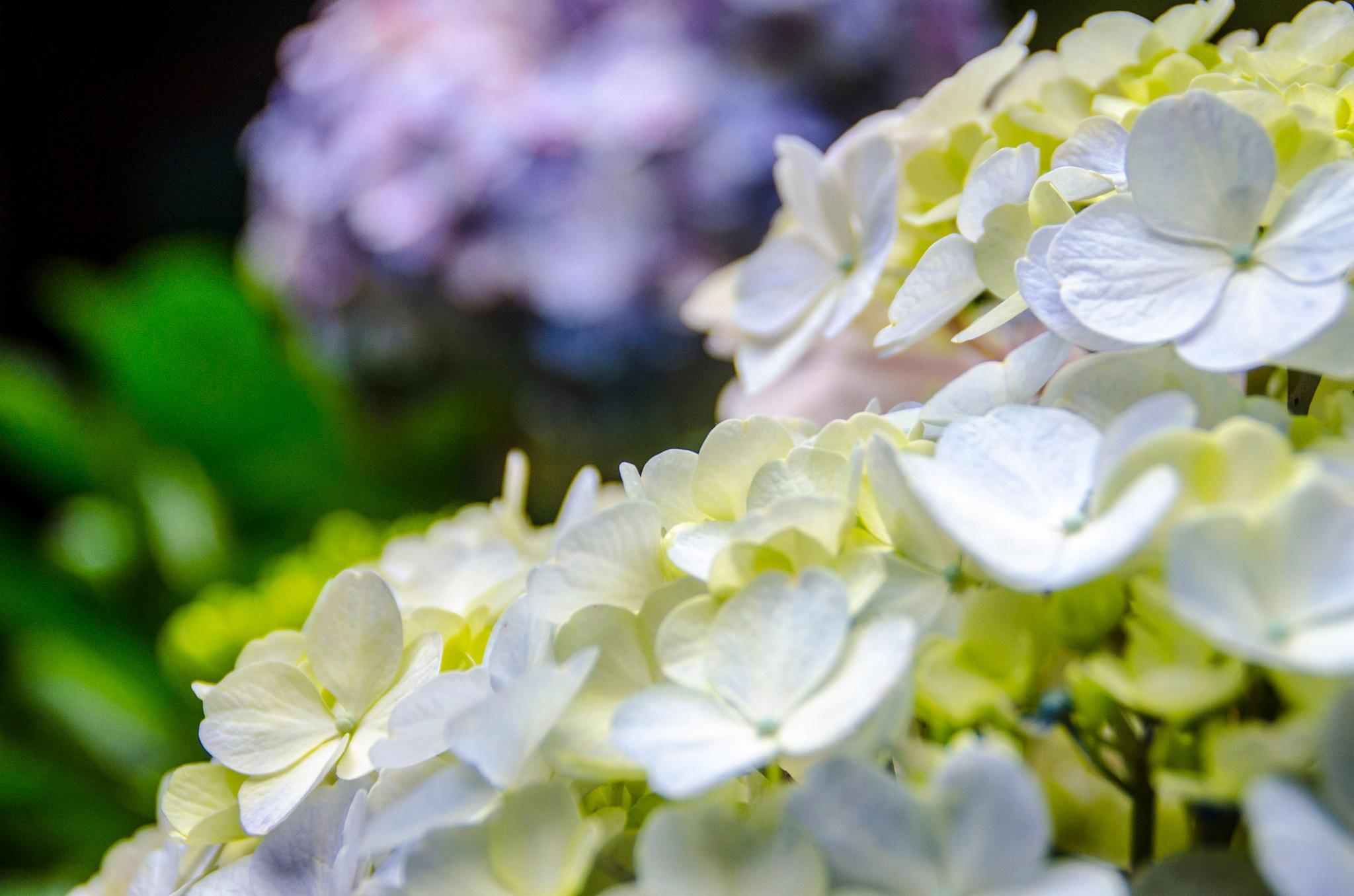 Close Up Flower by omfotografer