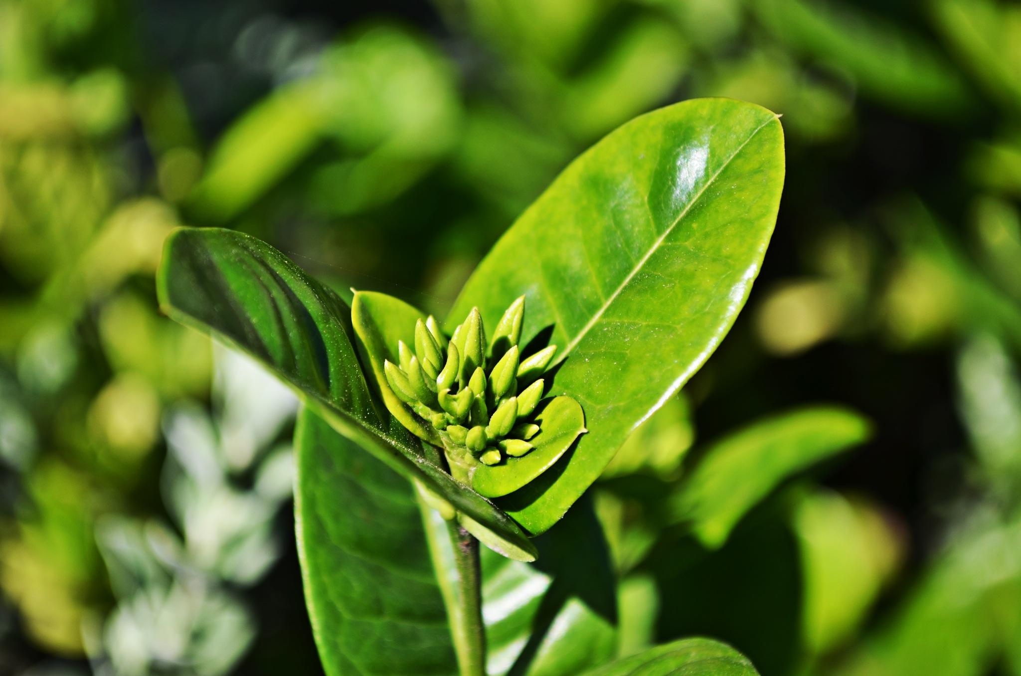 Green beauty by VictorDelahoz