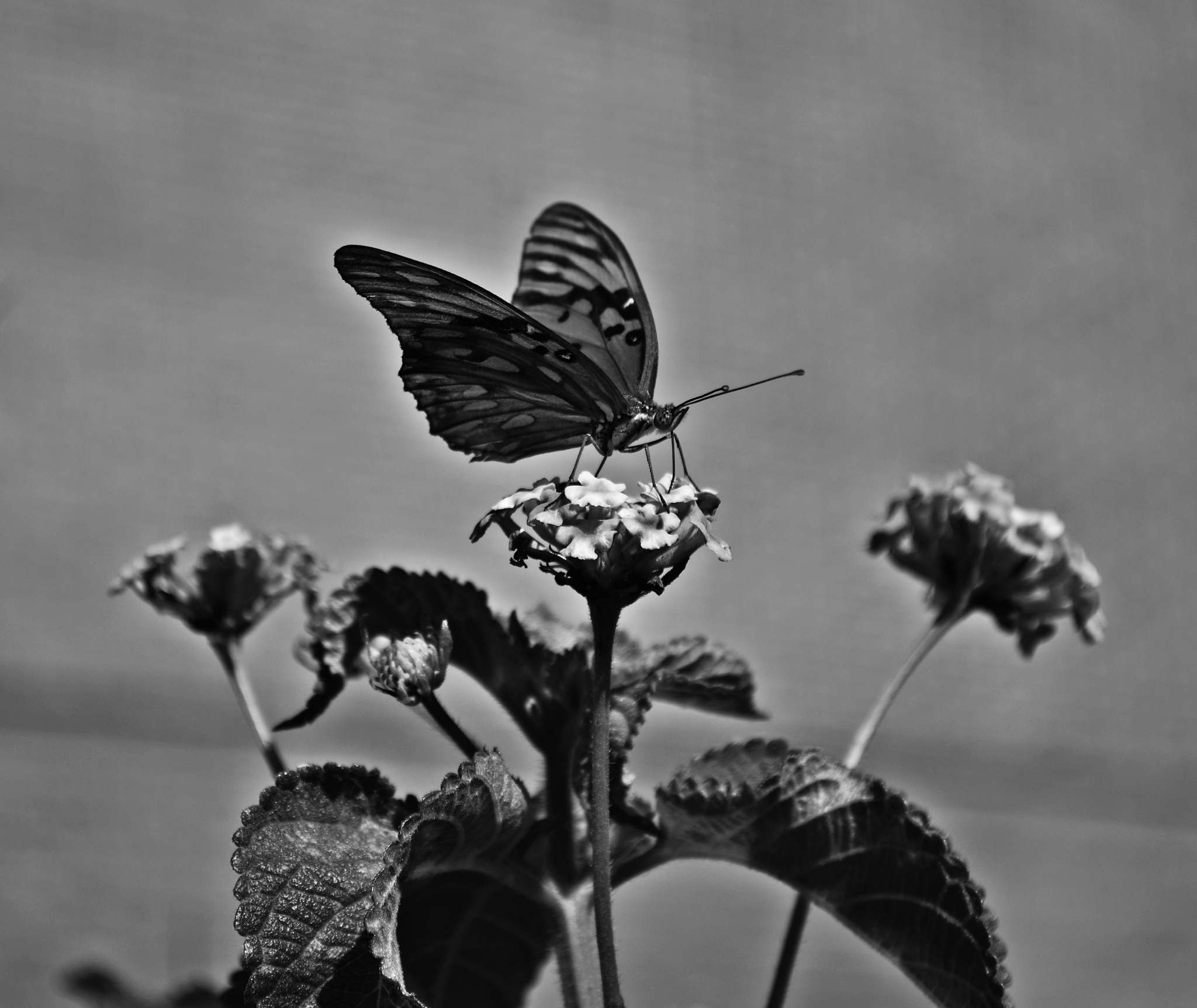 nature in black and white by VictorDelahoz