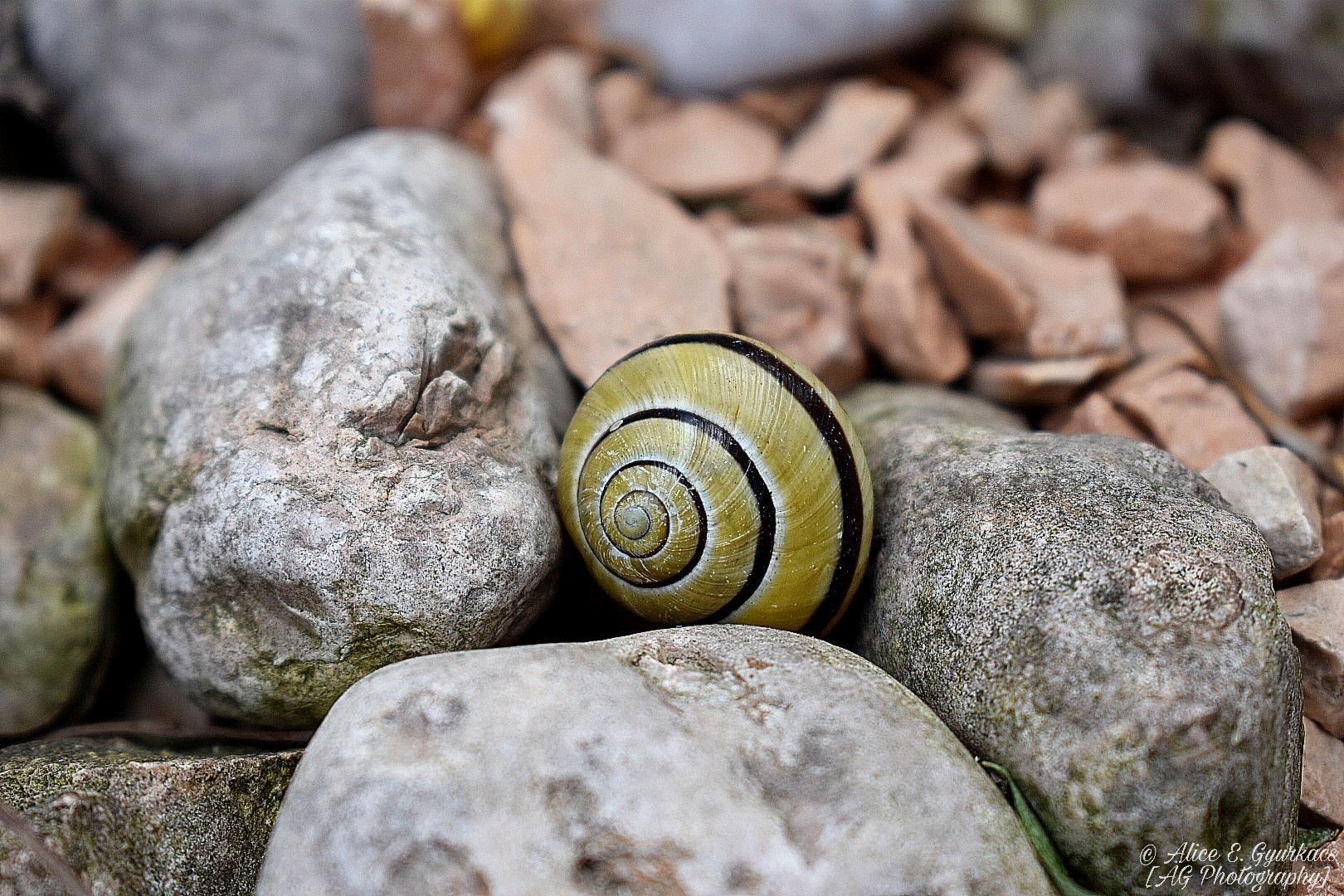Snail ~ by Alice E. Gyurkacs