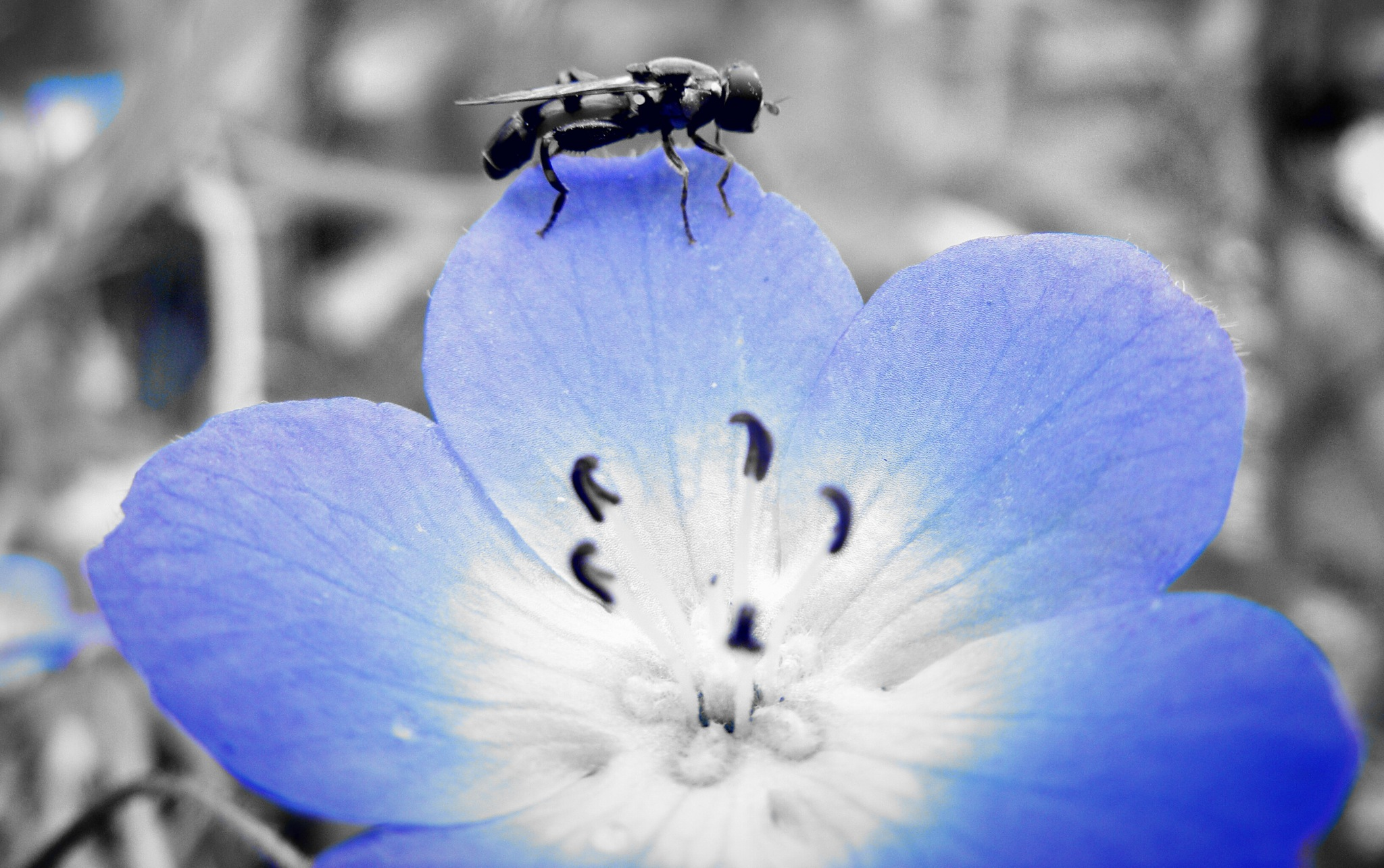 Its a bugs life by Adam M