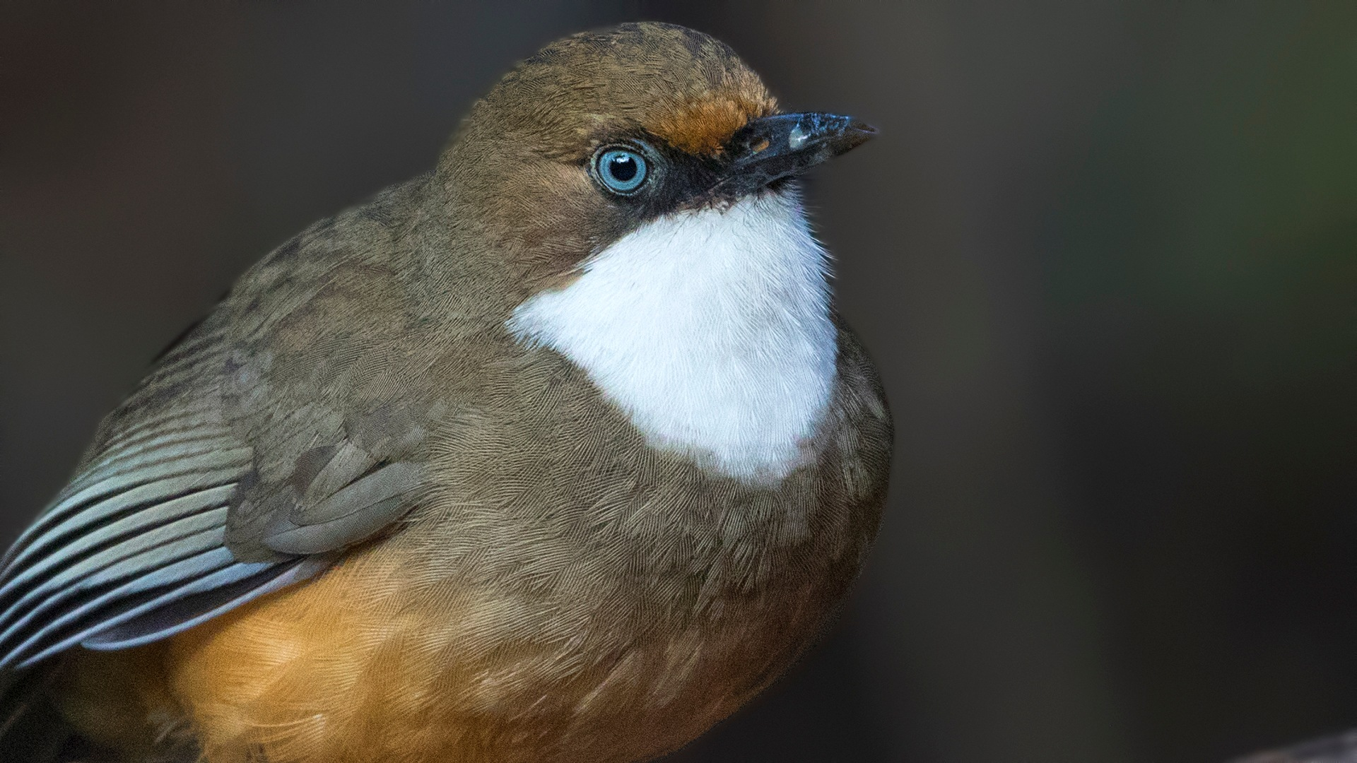 Photo in Animal #bird #india
