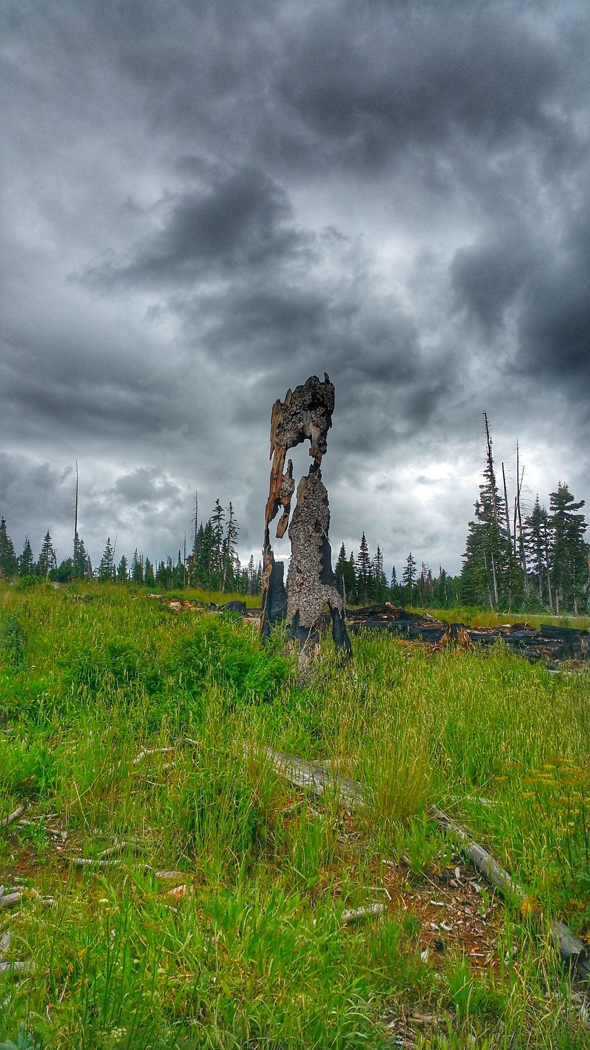 Fire Tree by patkat23