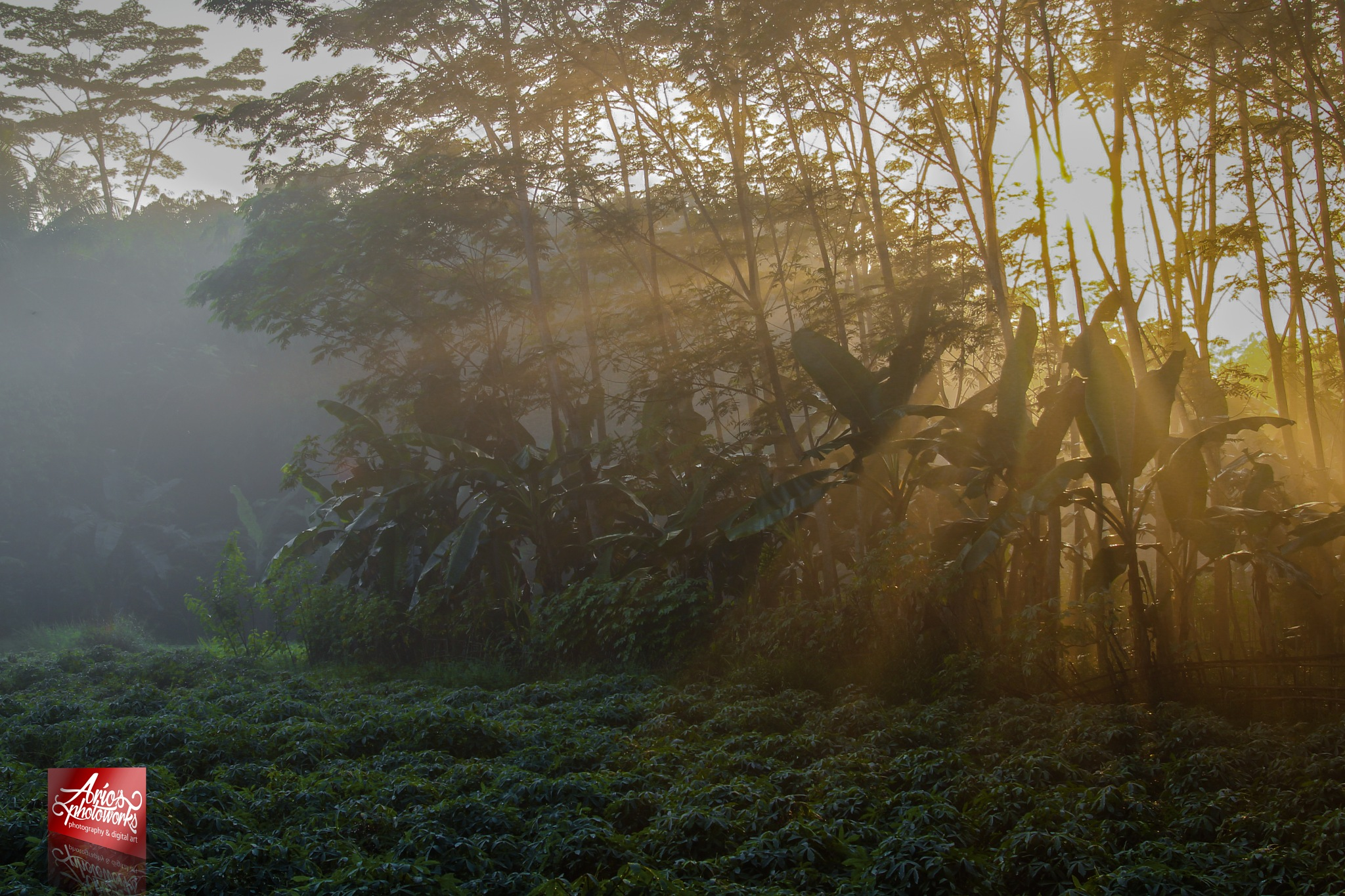rayoflight by ario photowork
