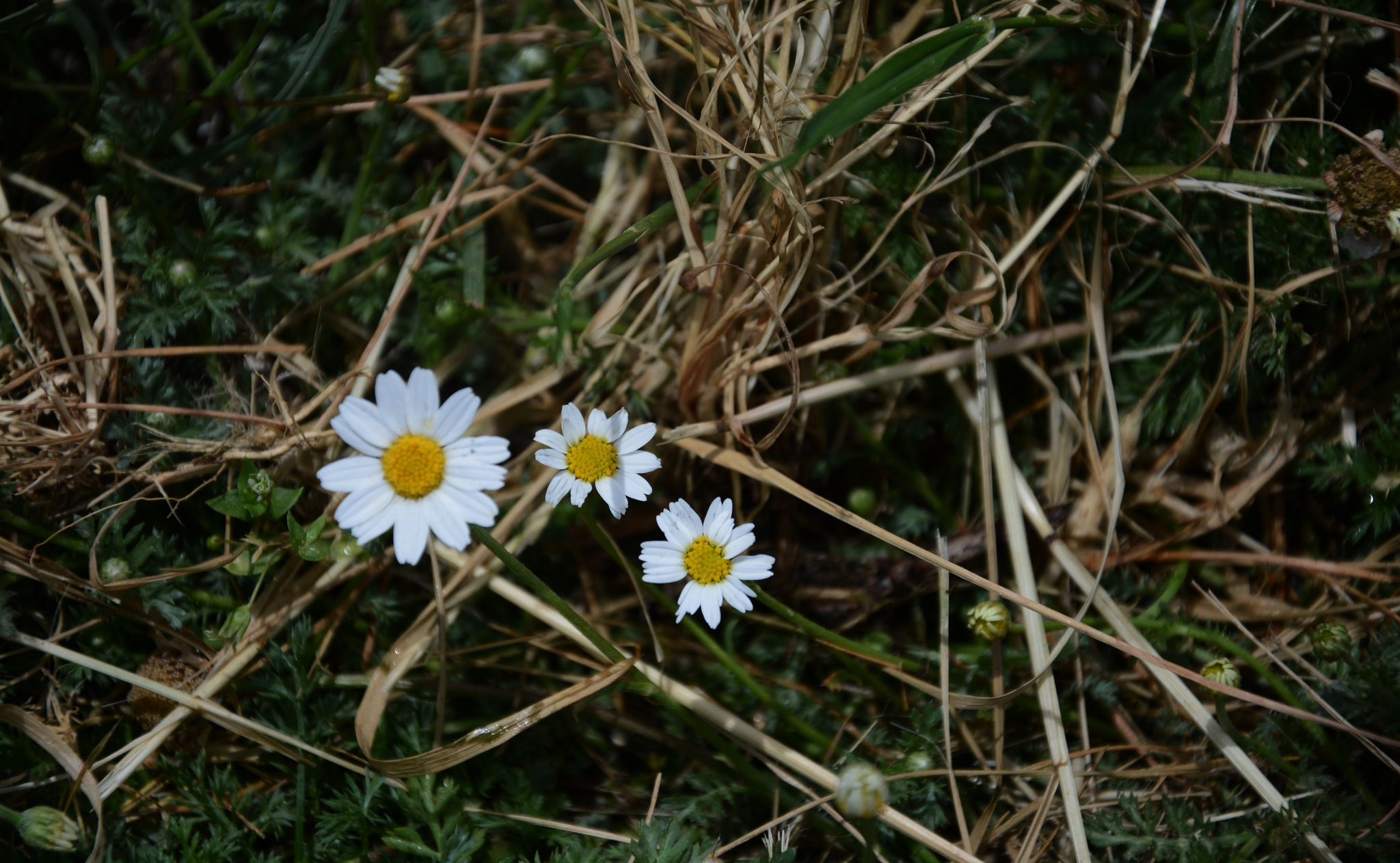 Sarà primavera? by SantinaSorbello