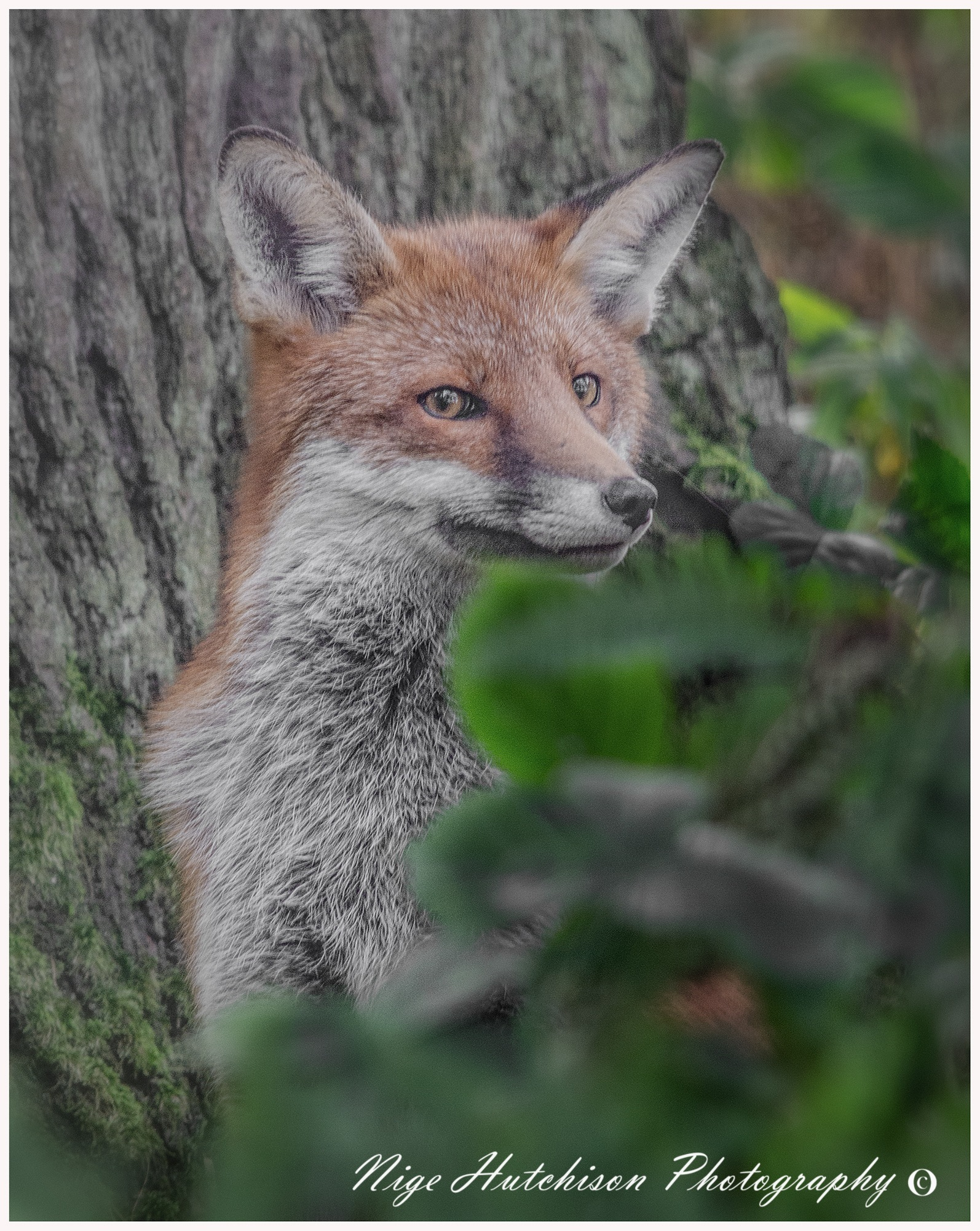 Can you see me? by NigeHutchison