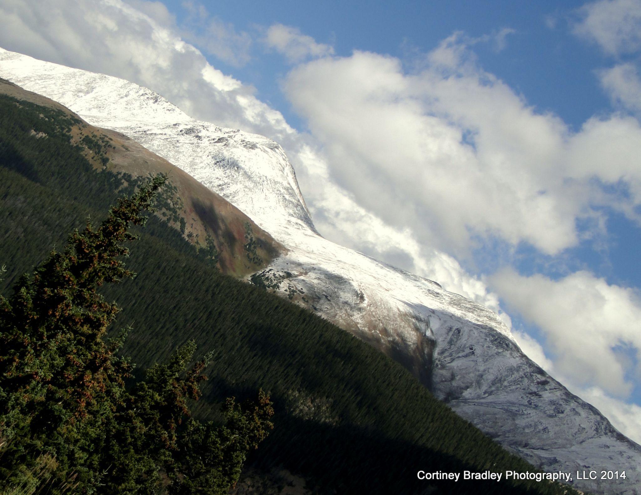 Season's First Snowfall by cortineybradleyphotography