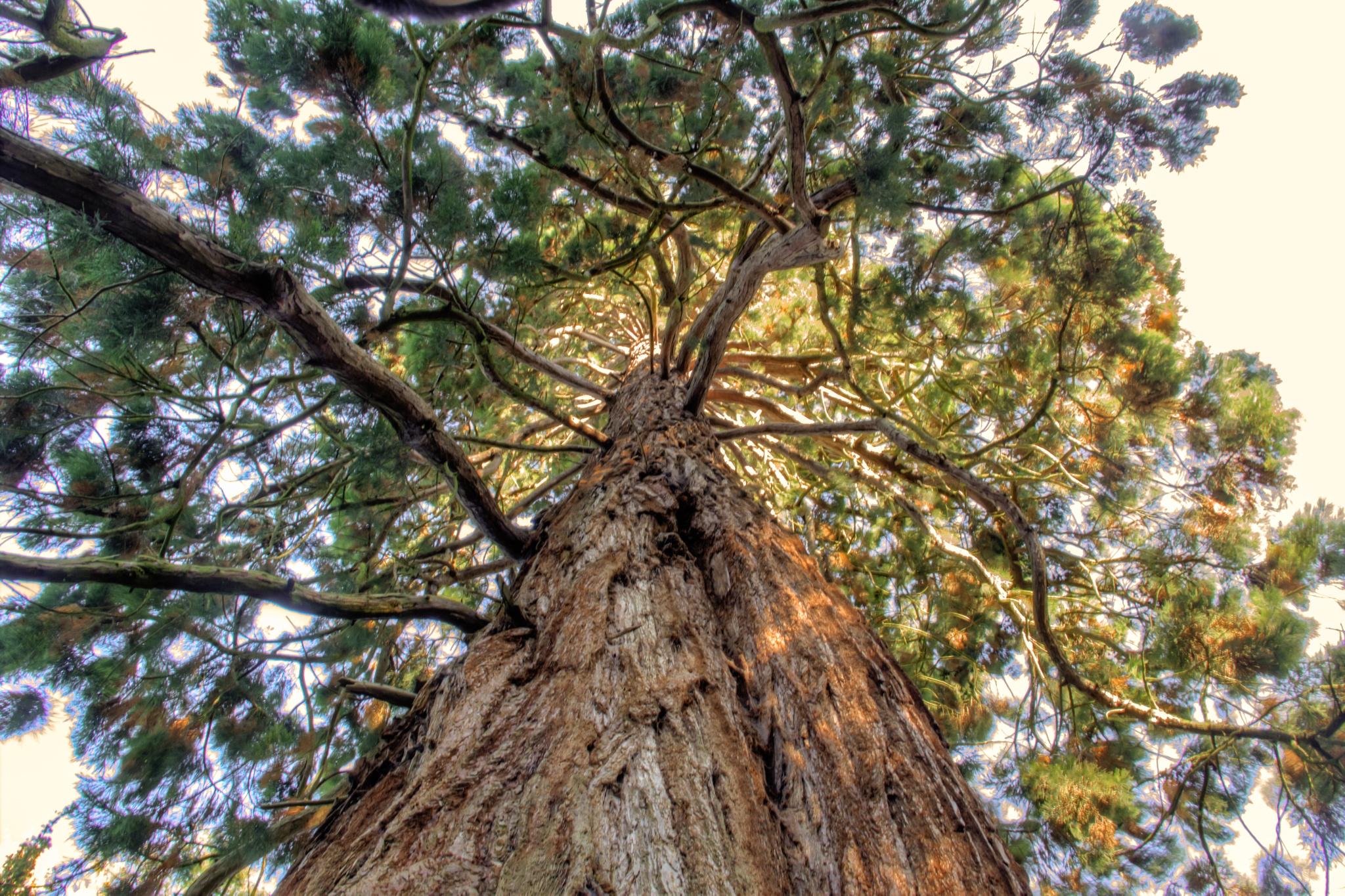 Amazing tree by Stephen Warner