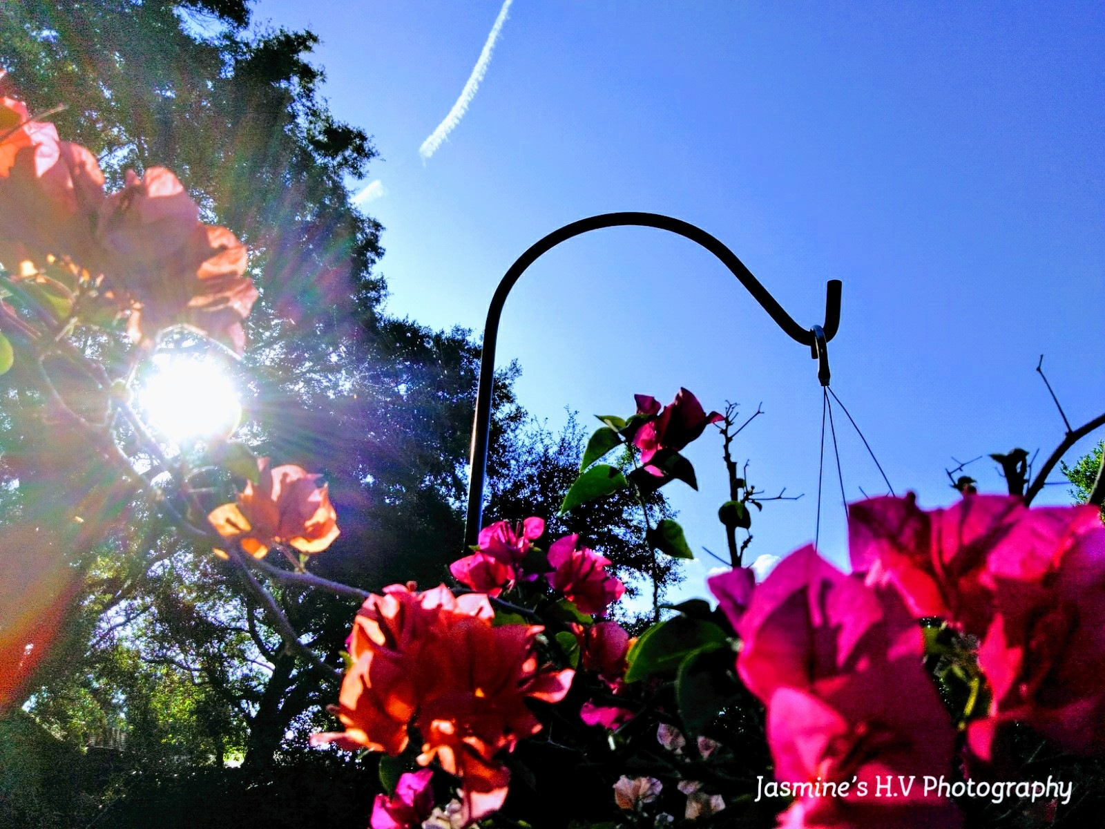 Flowers  by Jasmine Hunt