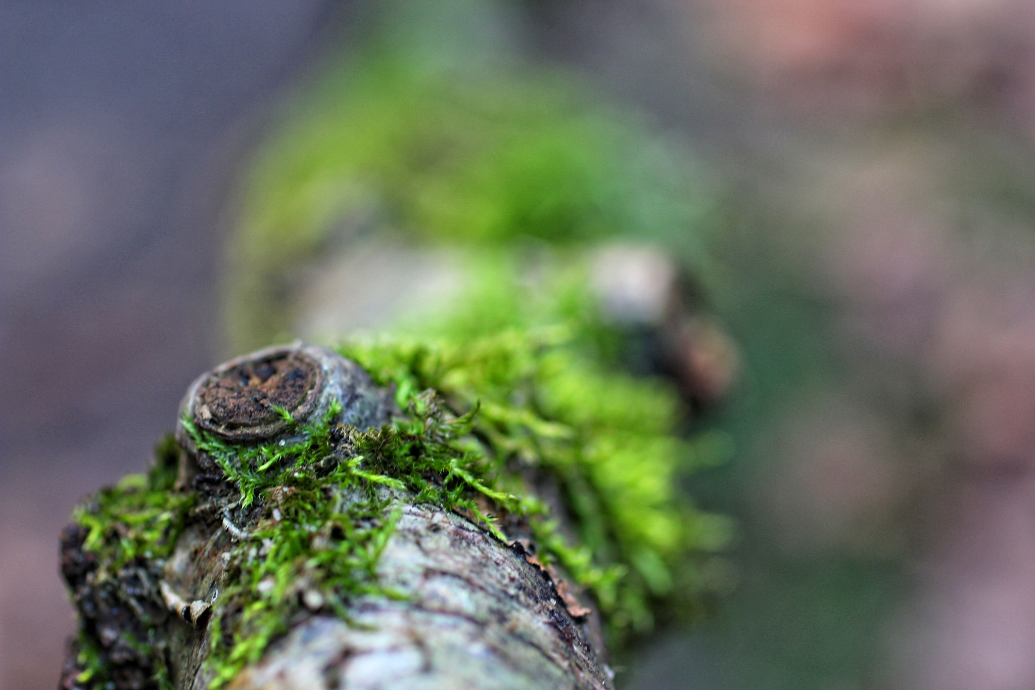 Wood by Gertie Weijers