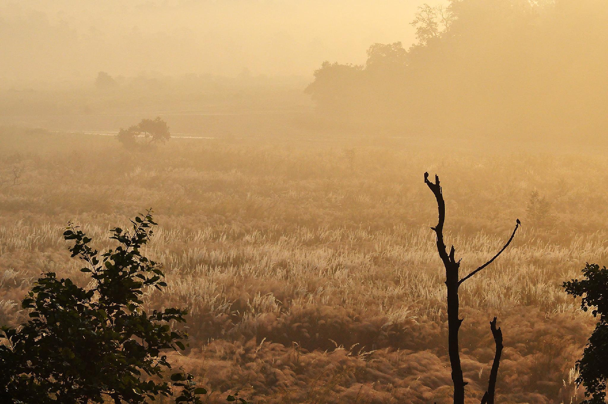 Morning by devendrabhardwaj
