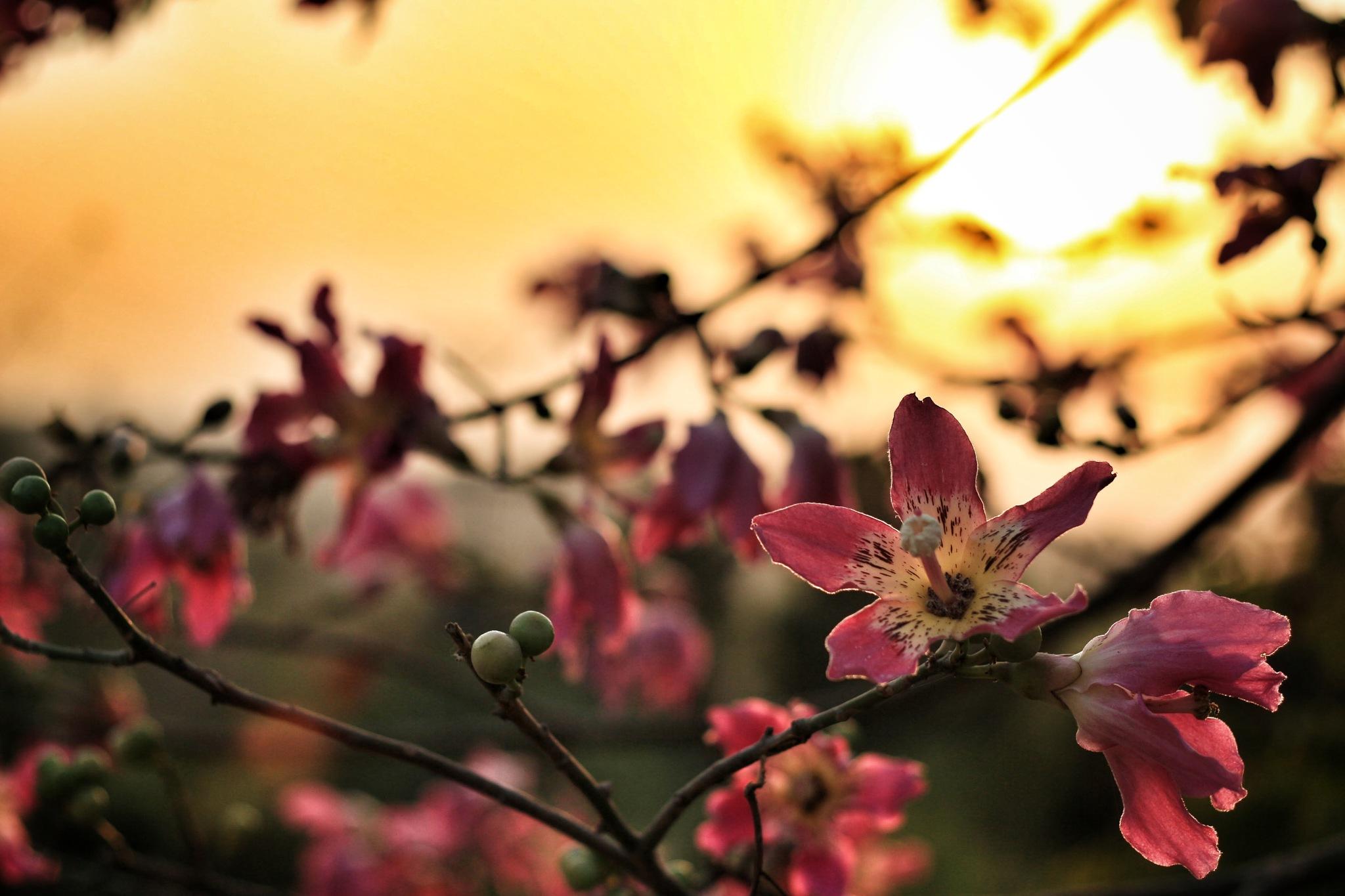 bloom by Adnan A. Khan