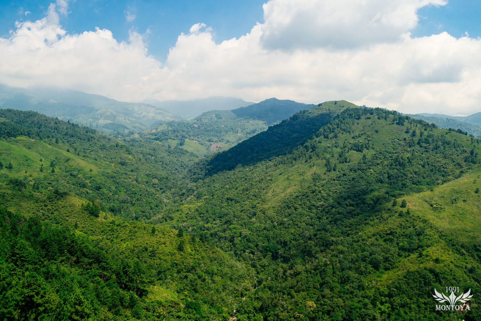 bosques del valle by David Montoya