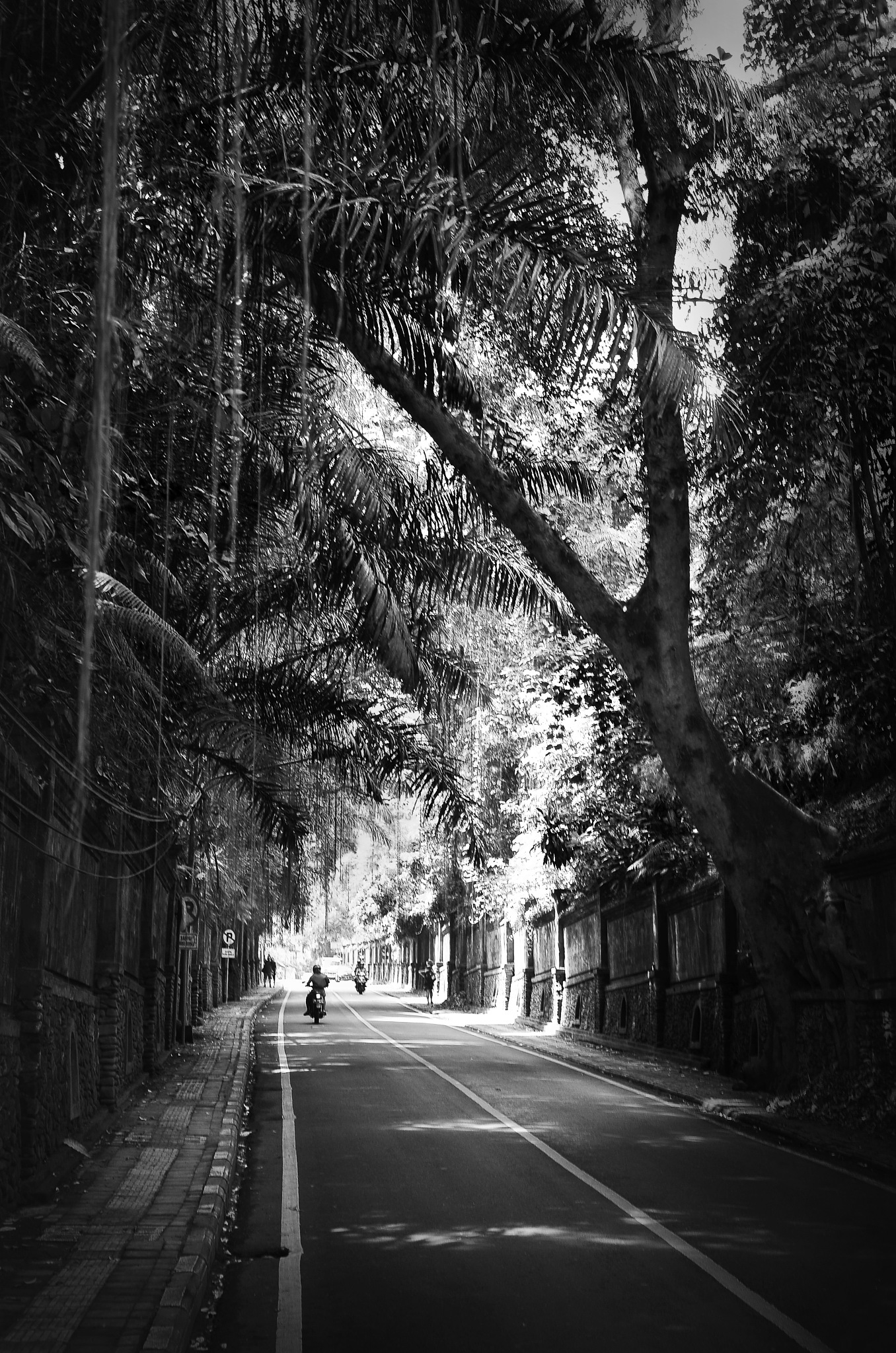 Jungle street in Bali by Bram Busink