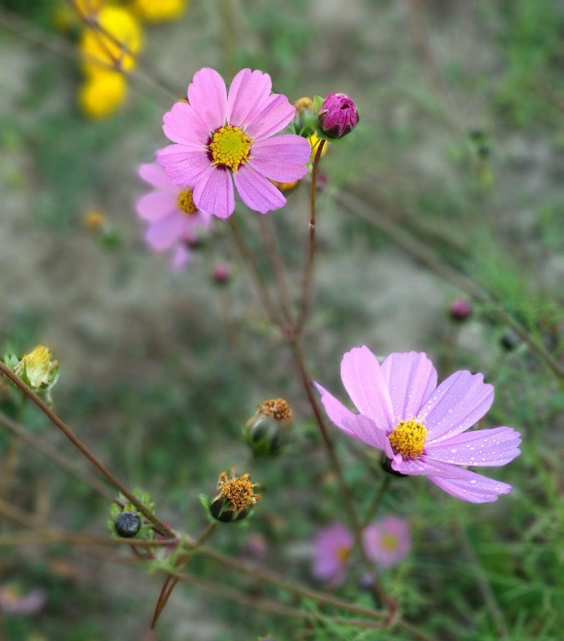 Flowers by Mahendra Chaurasia