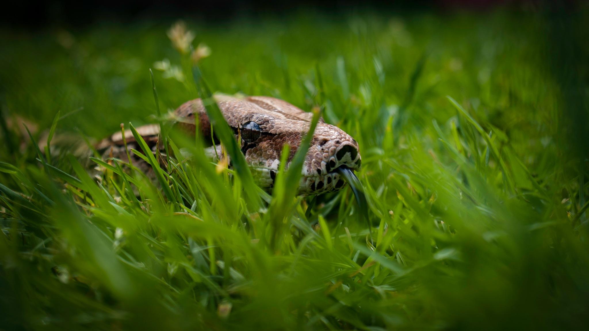 Snake in a park by JB Boucher