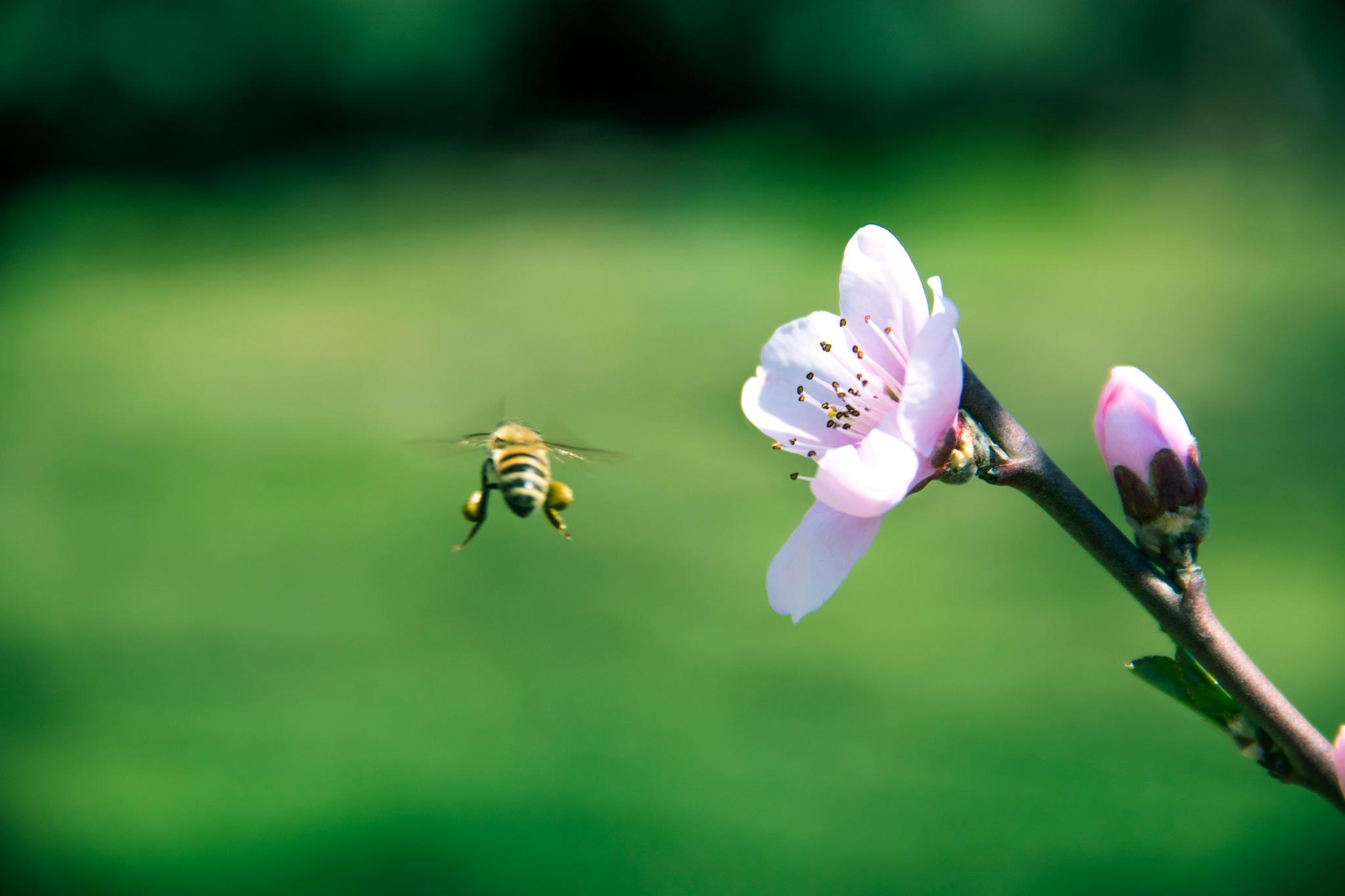spring  by Farzaneh Alavi