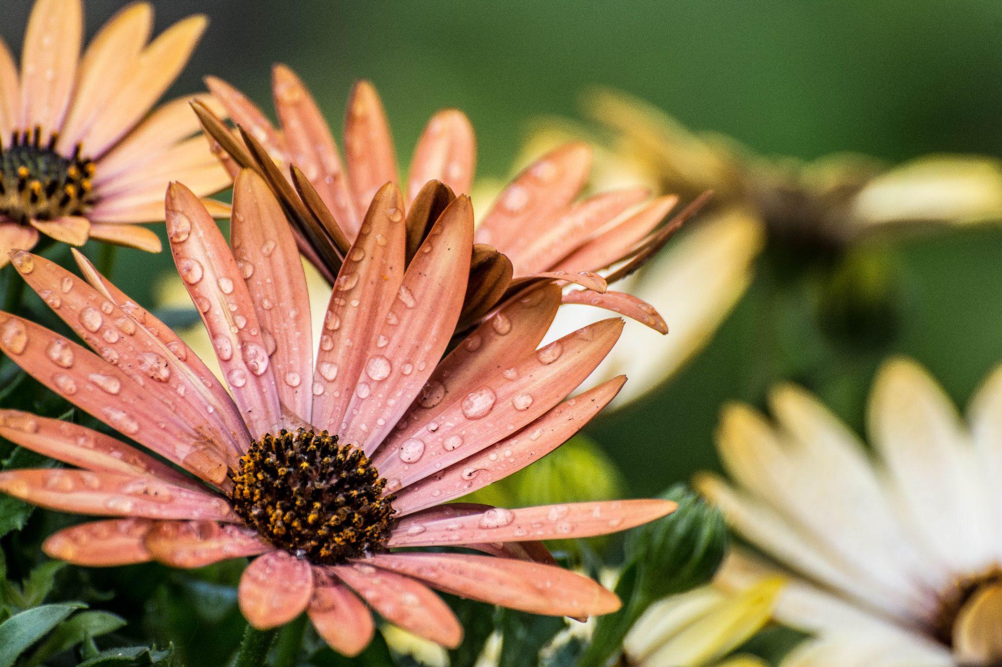 flower 3 by Kees van Es