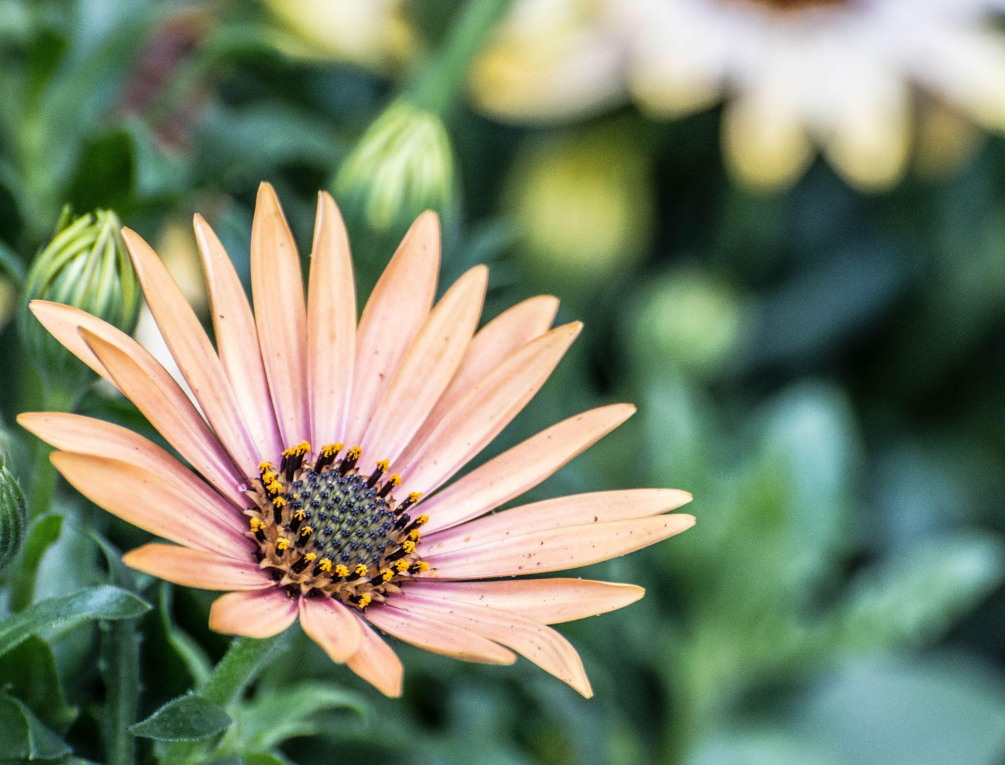 bloempje 8 by Kees van Es