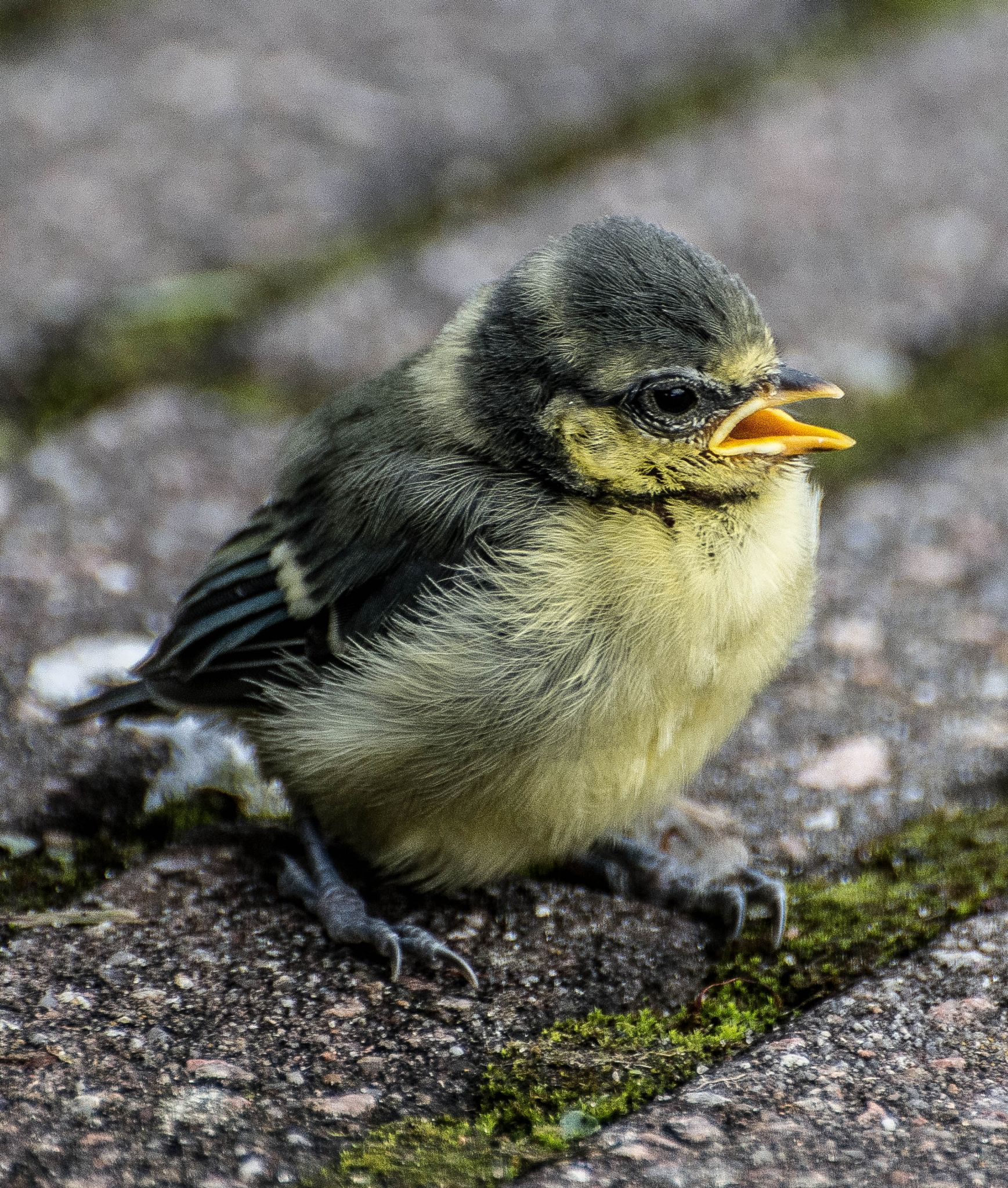 going down on his first flight. by Kees van Es