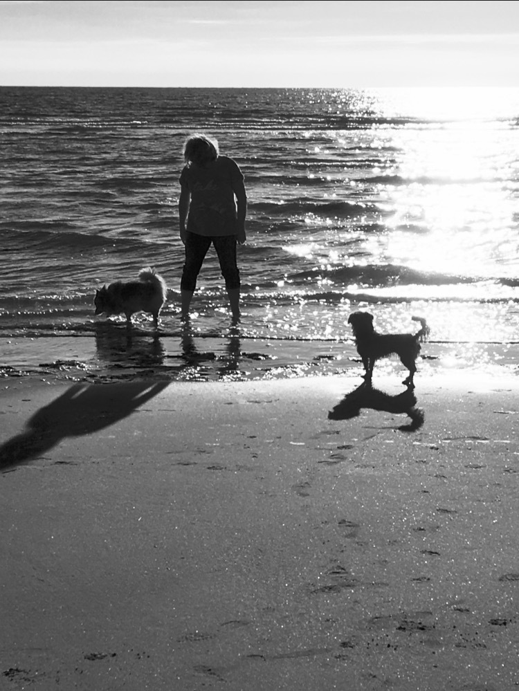 Sea, Me & Dogs  by Tracy Lewis