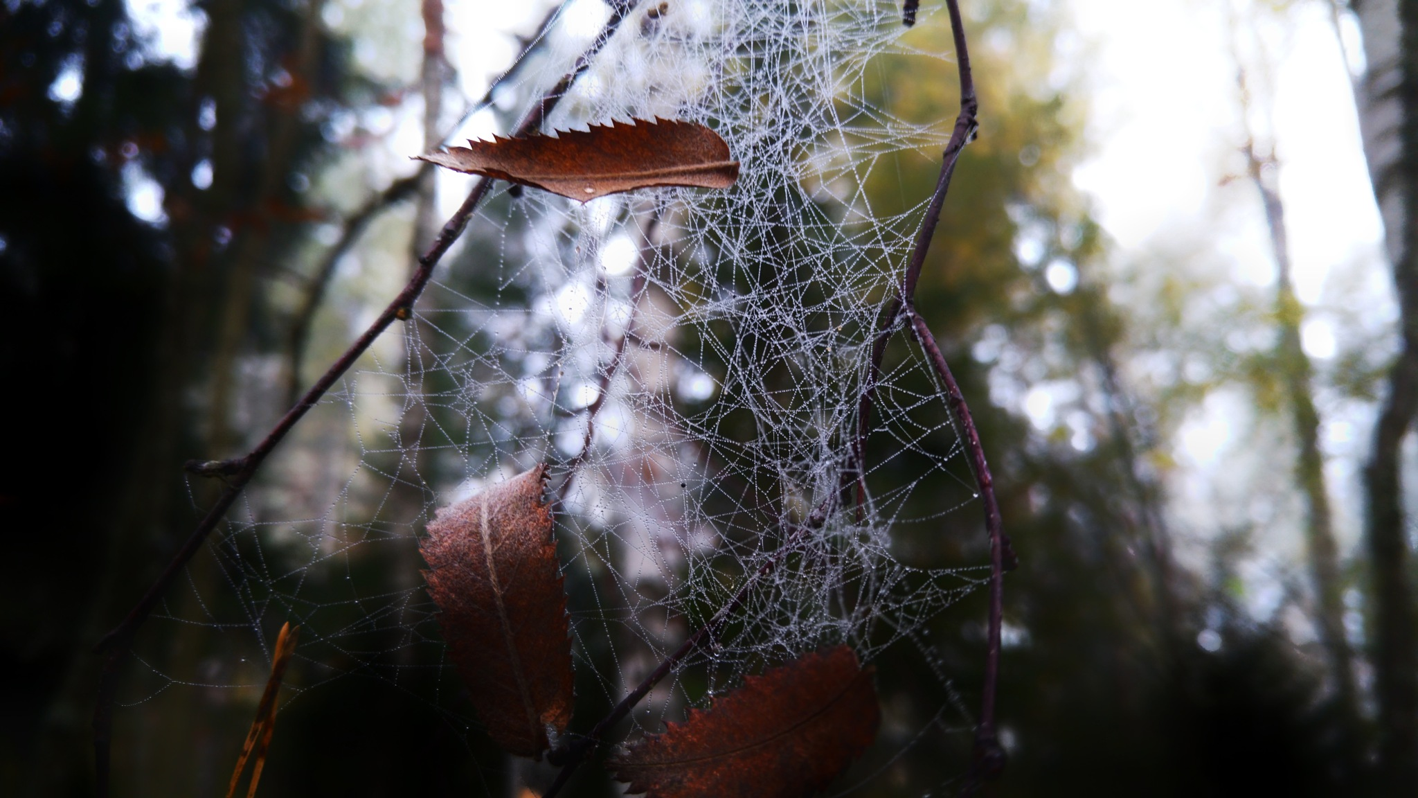 spiders the best artist in the Woods  by Jani Vauhkonen