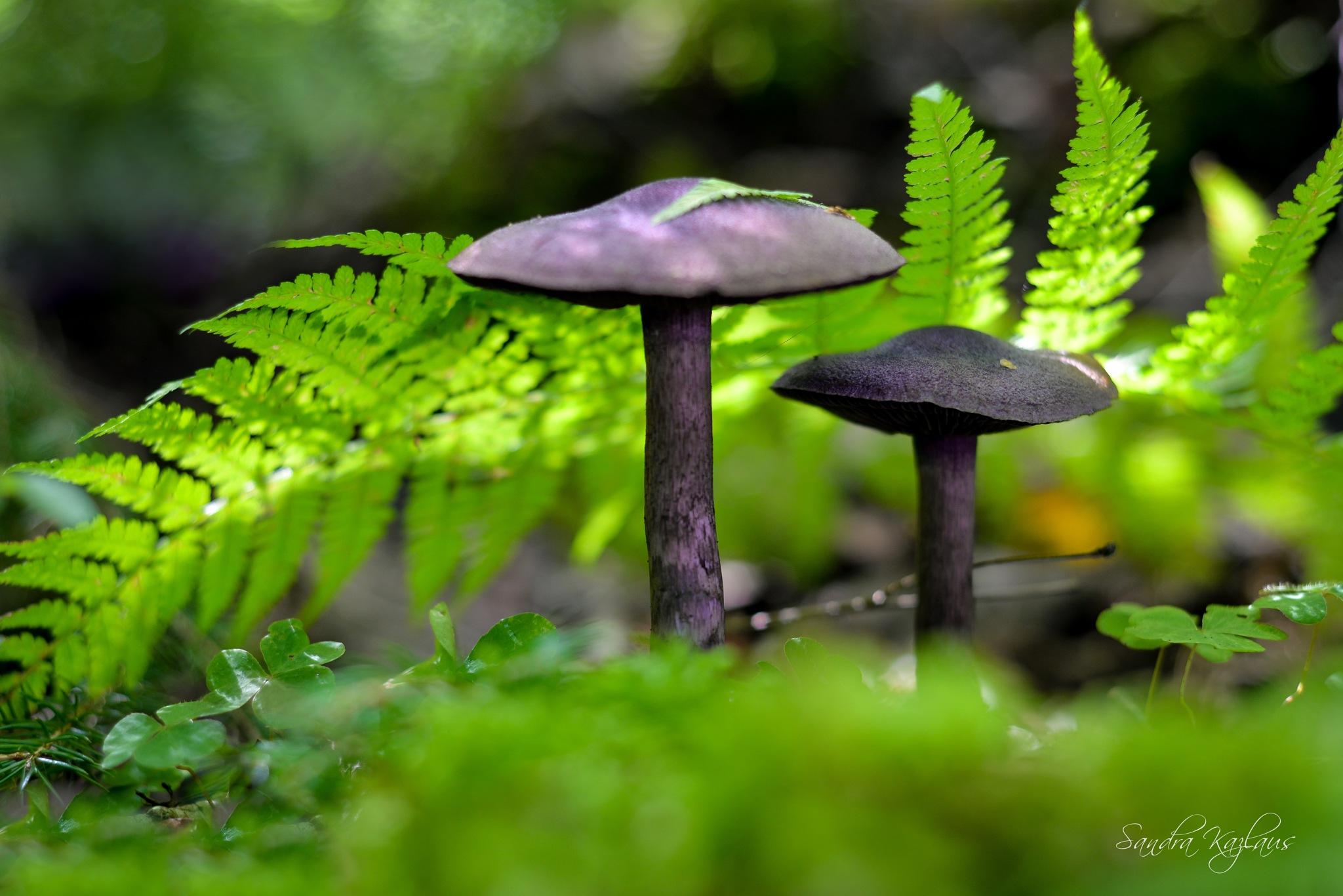 ...mushrooms... by Sandra Kazlaus