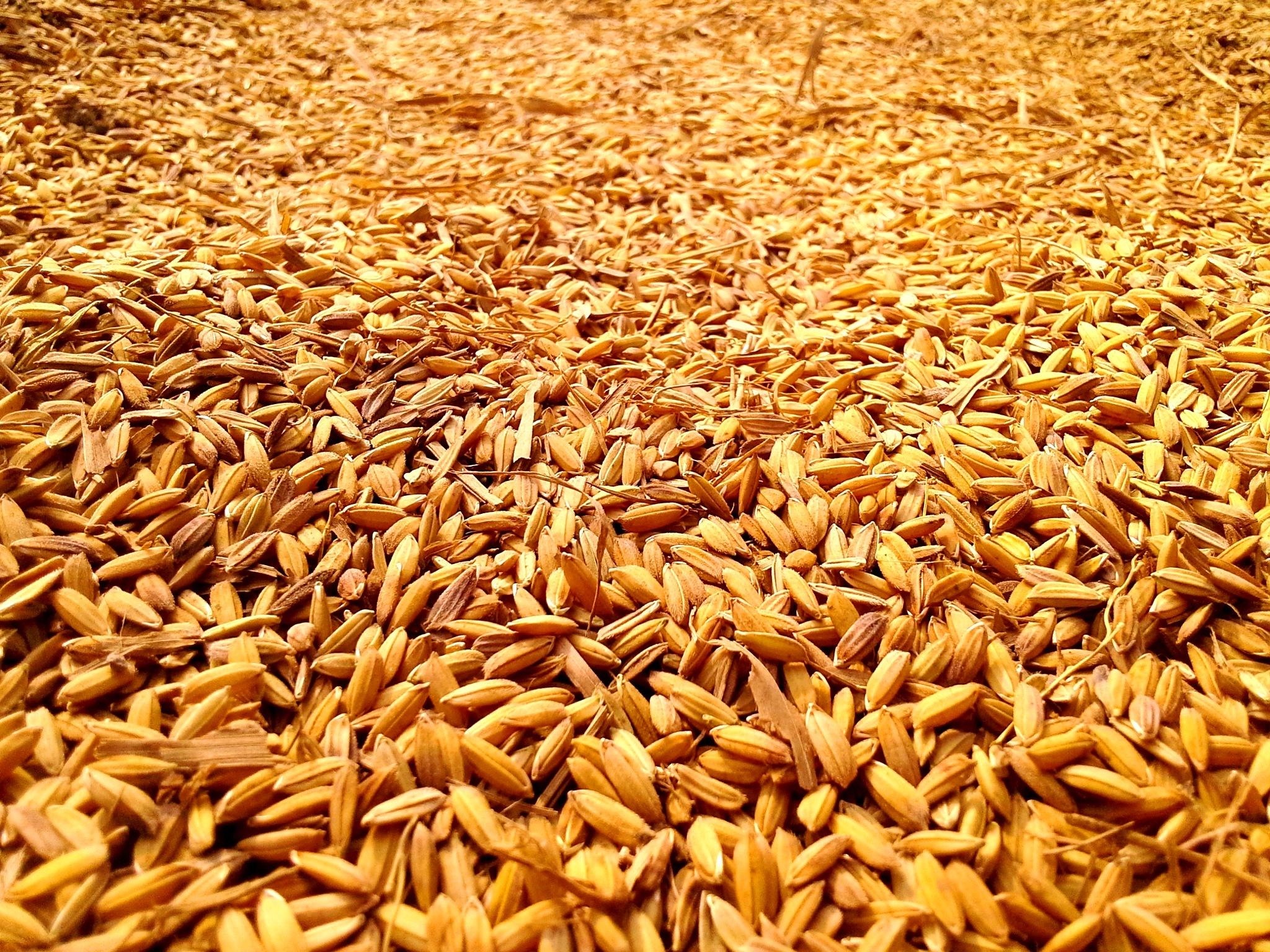 The Gold Of Bangladesh by Kabir Faisal