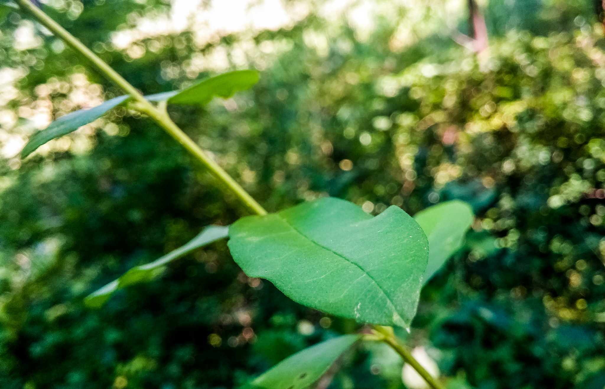 The leaves hold through the harsh cold to stay green for as long as they can. Summer is not giving u by Ashley Senior