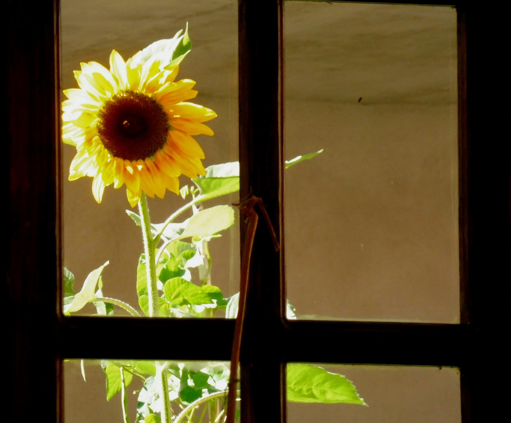 Goodmorning sunshine by ErinaL