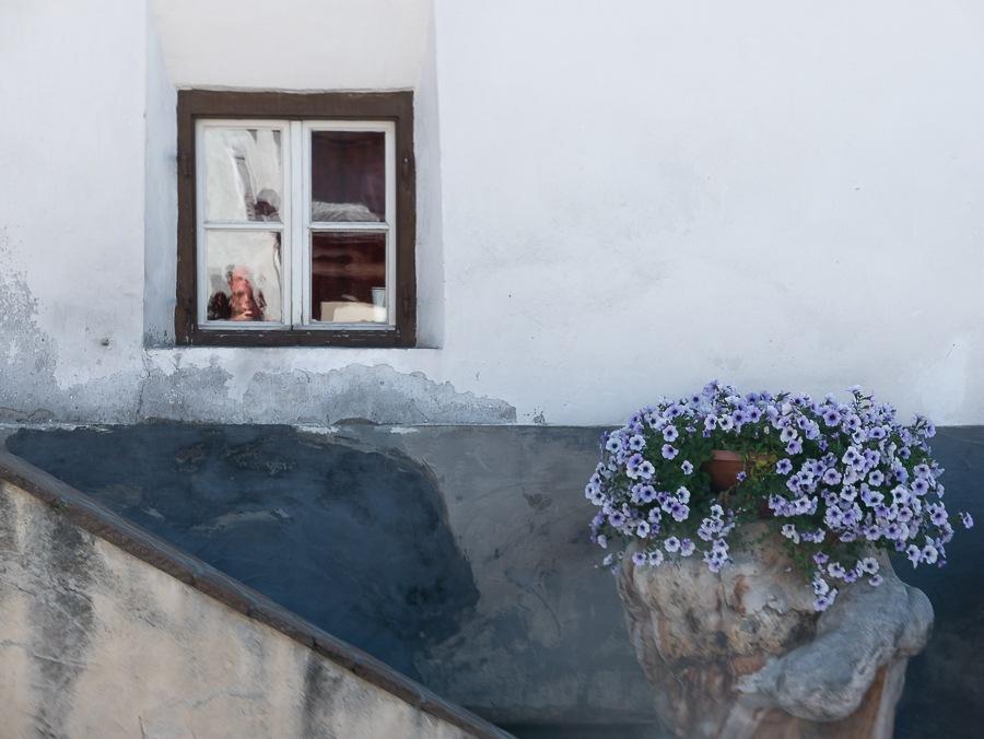 window in flower by GiorgioSacher