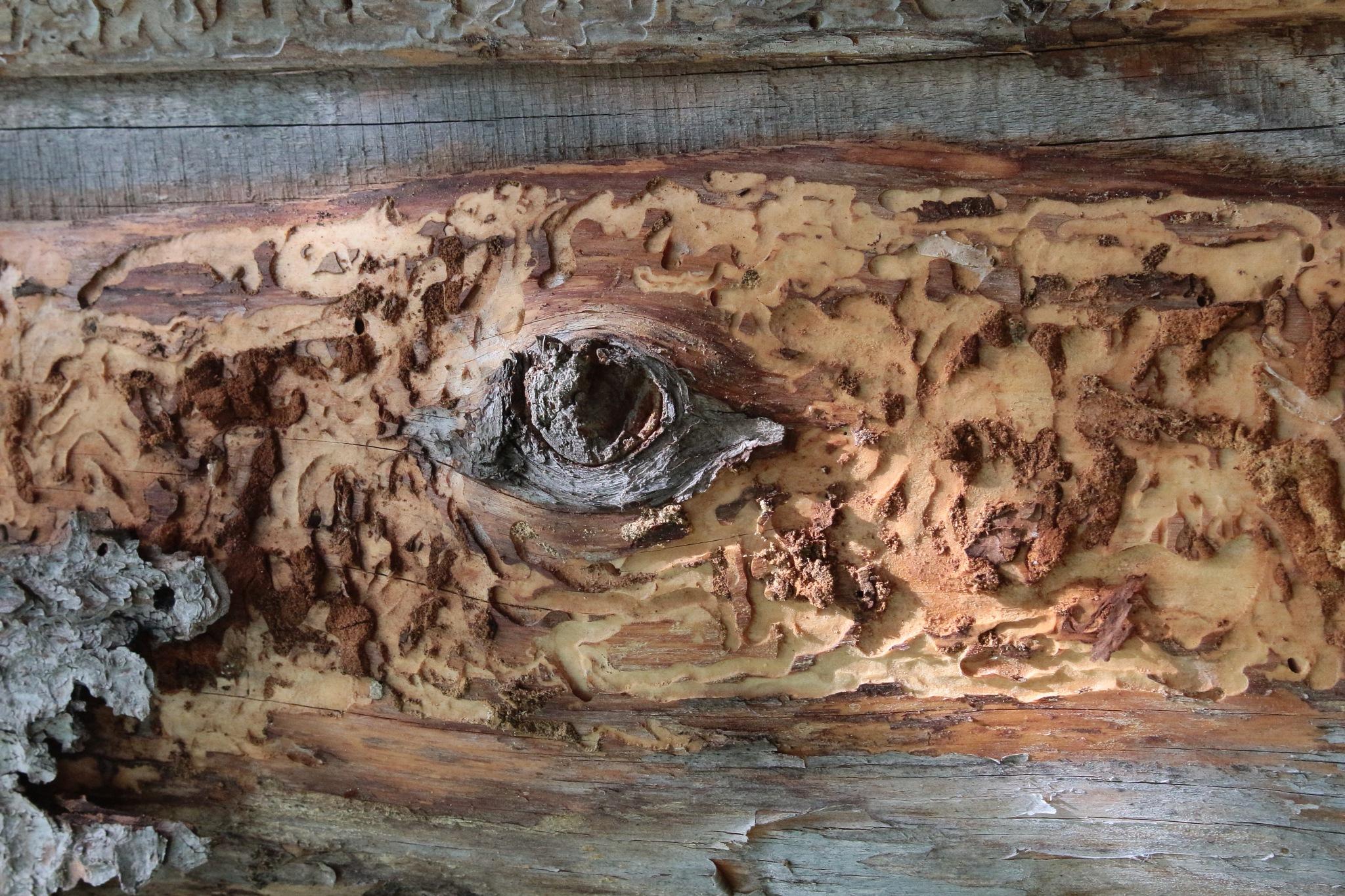 деревянные глаза by Alexandr  Zuev