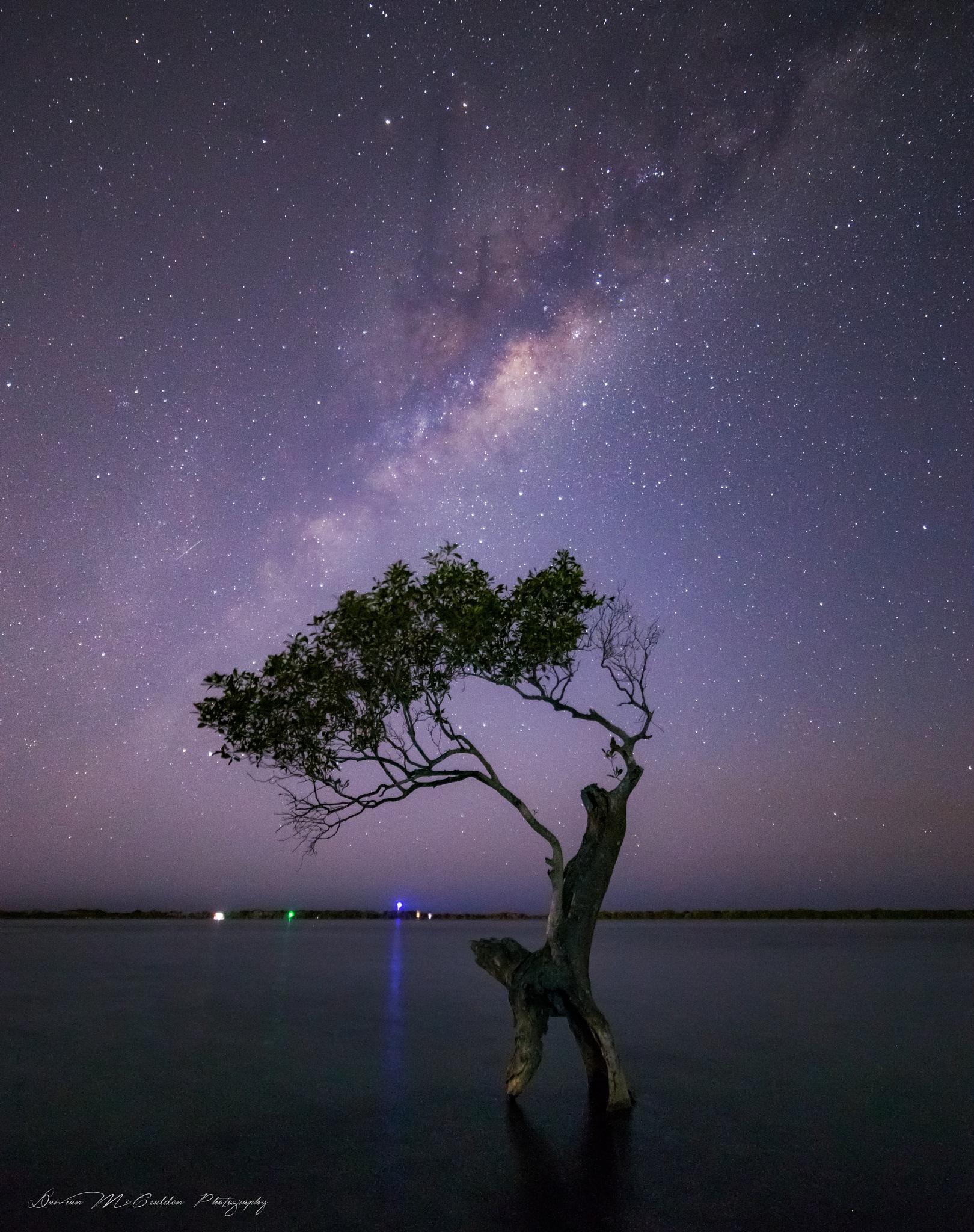 **The Mangrove Tree** by Damian McCudden